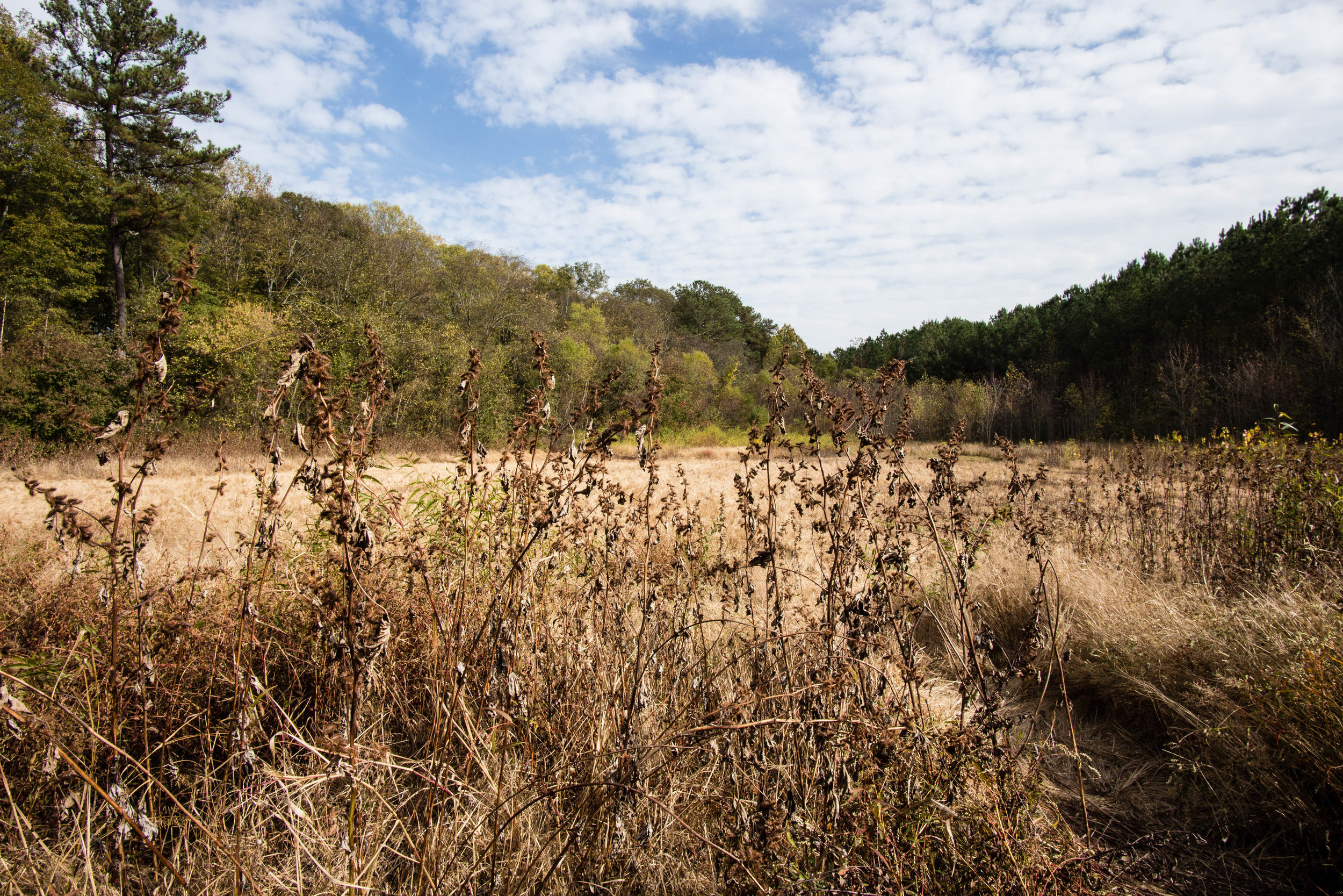 Inside the beaver pond during the drought, November 12, 2016