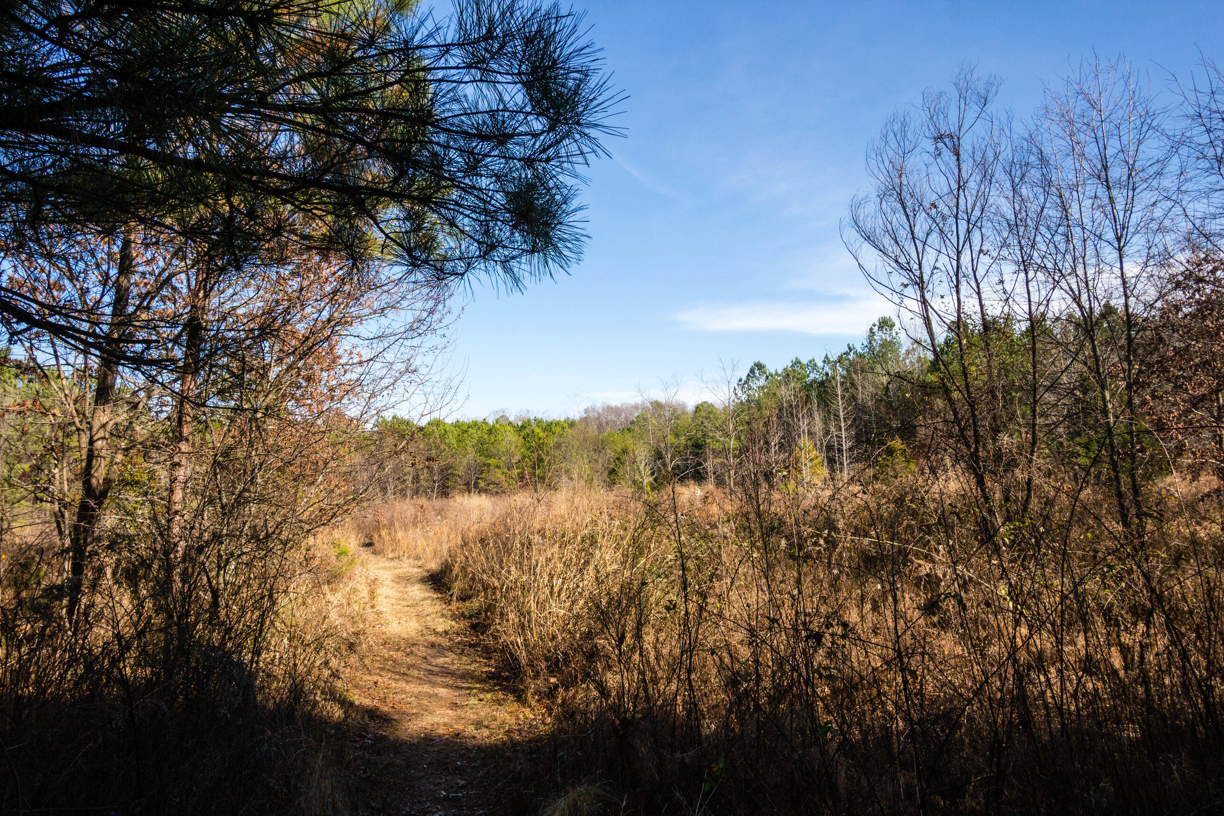 Songbird Habitat Trail, January 5, 2017