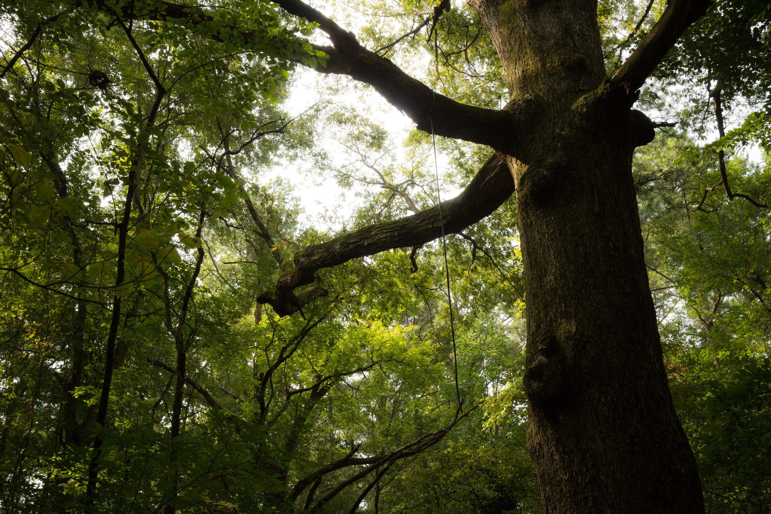 connally-nature-park_15022997692_o.jpg
