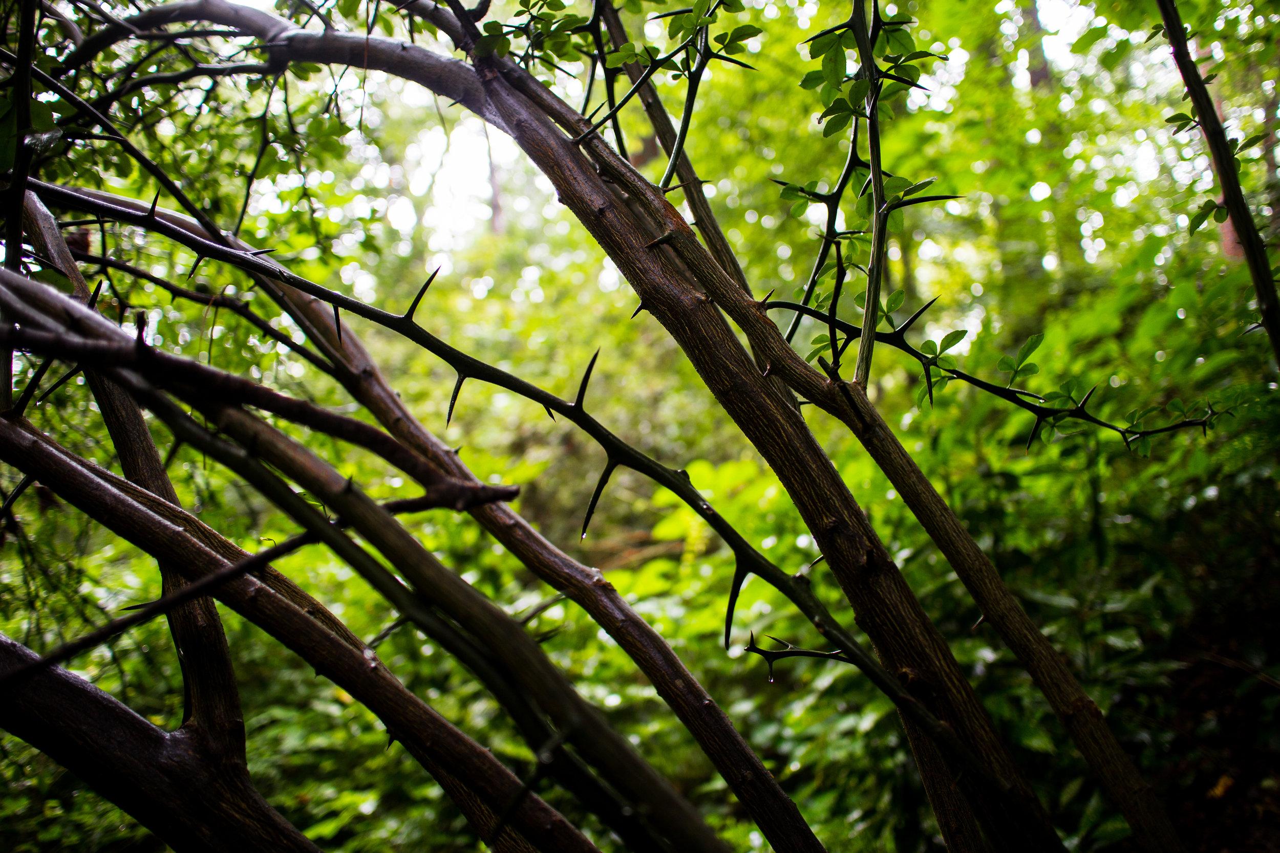 morningside-nature-preserve_14906453753_o.jpg