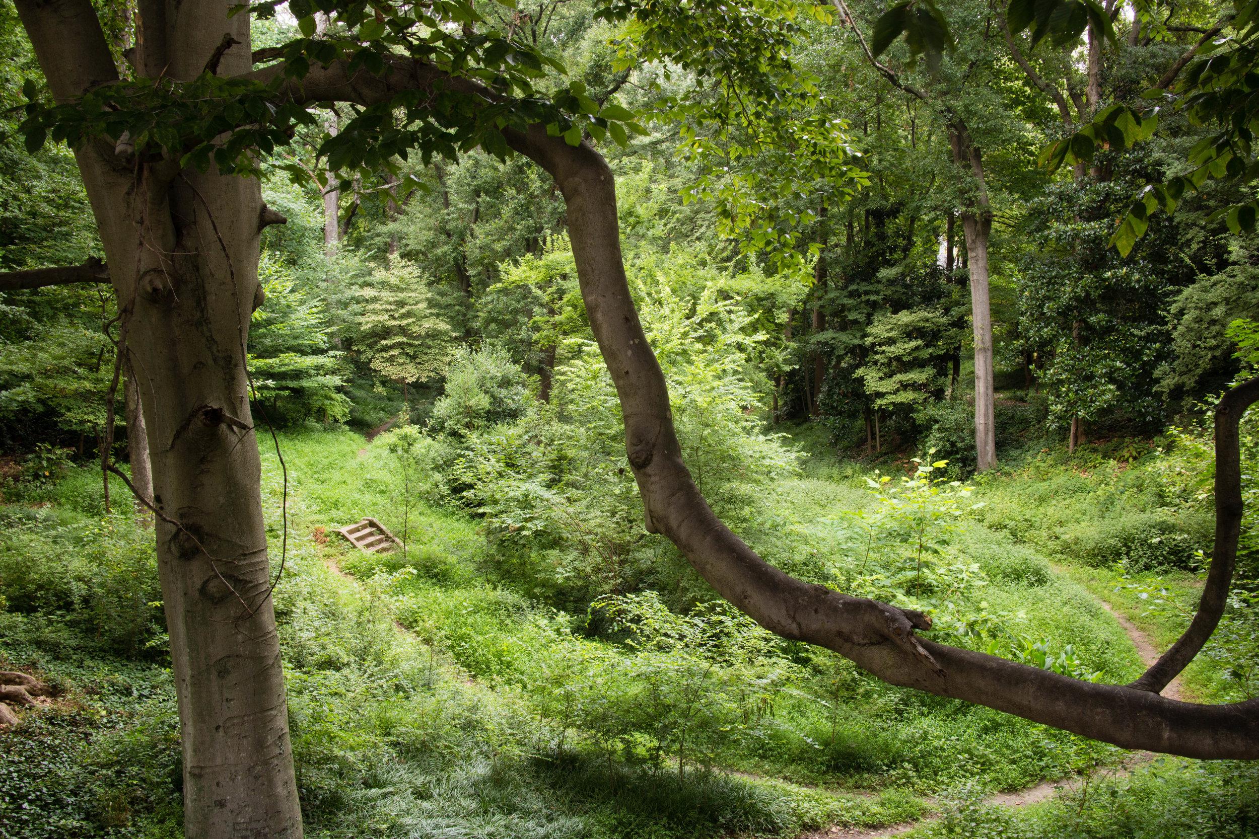 springvale-park_14626446027_o.jpg