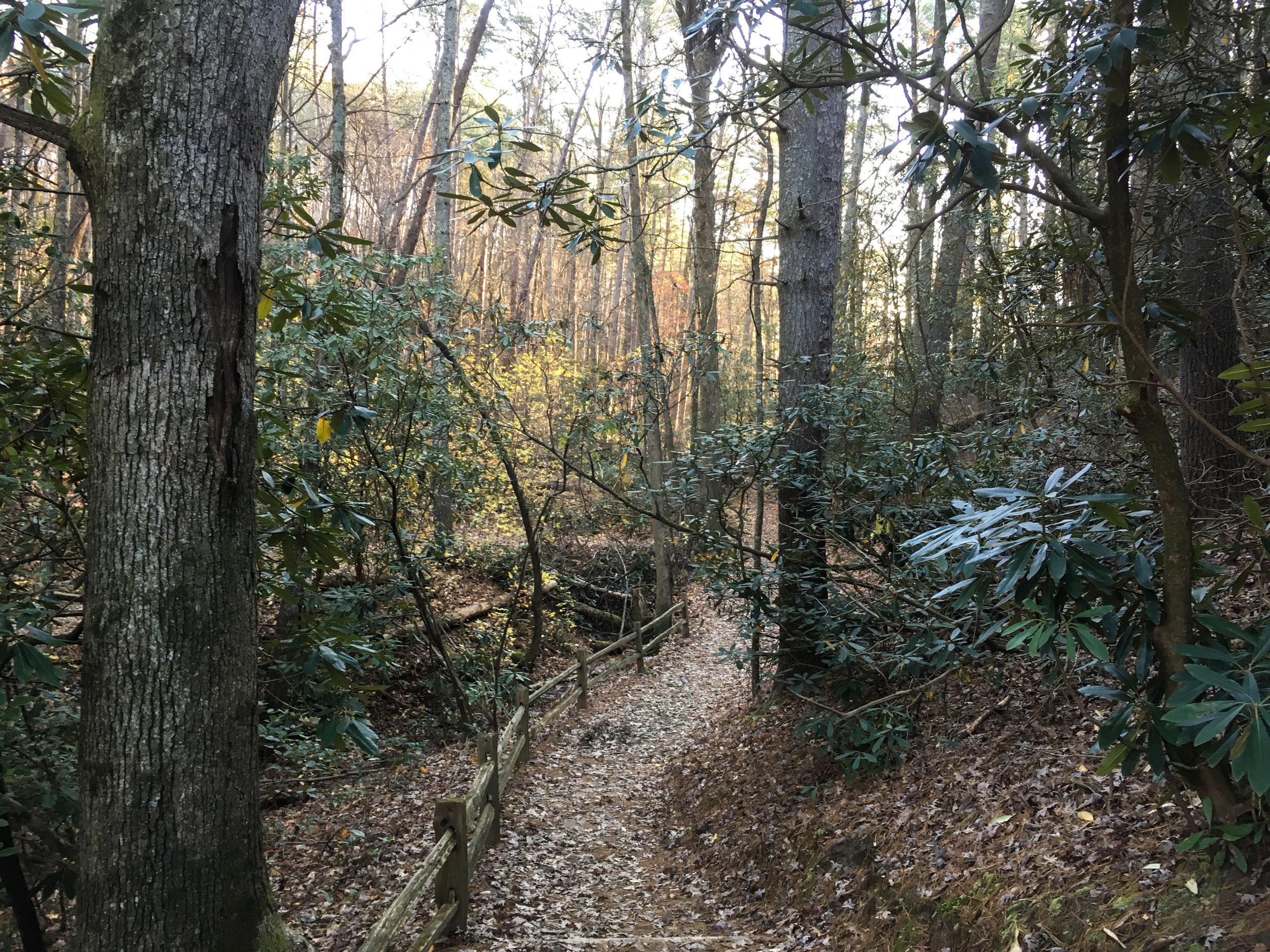 Unicoi Lake Trail, November 23, 2017