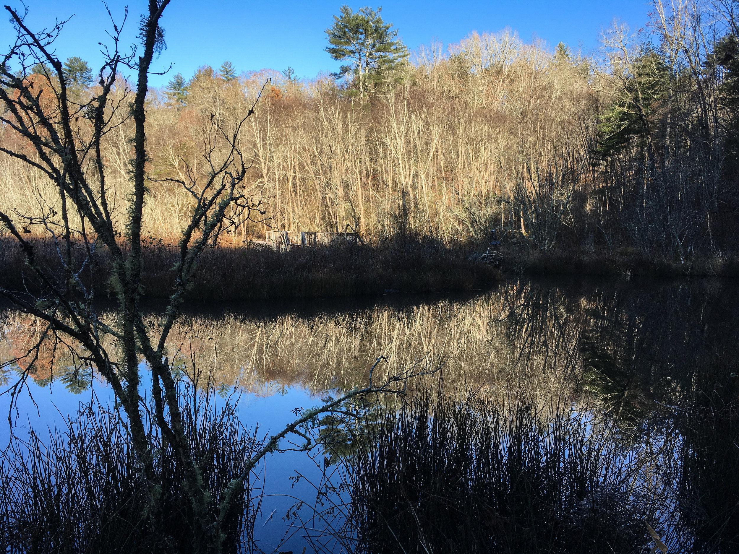Wetland Loop Trail, November 24, 2017