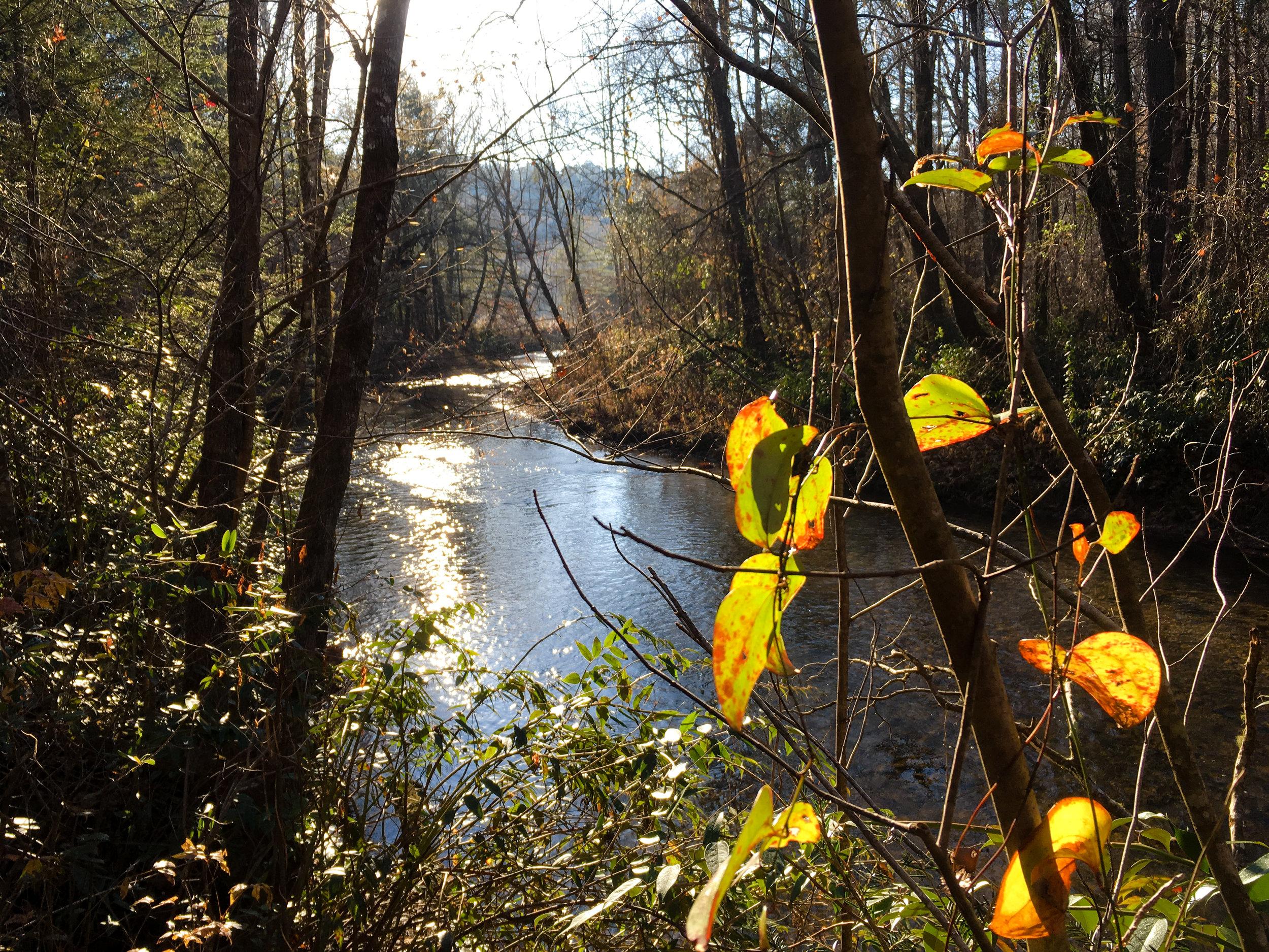 Dukes Creek, November 24, 2017