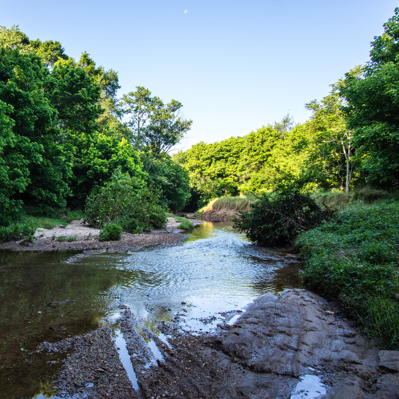 Intrenchment Creek, June 7, 2015