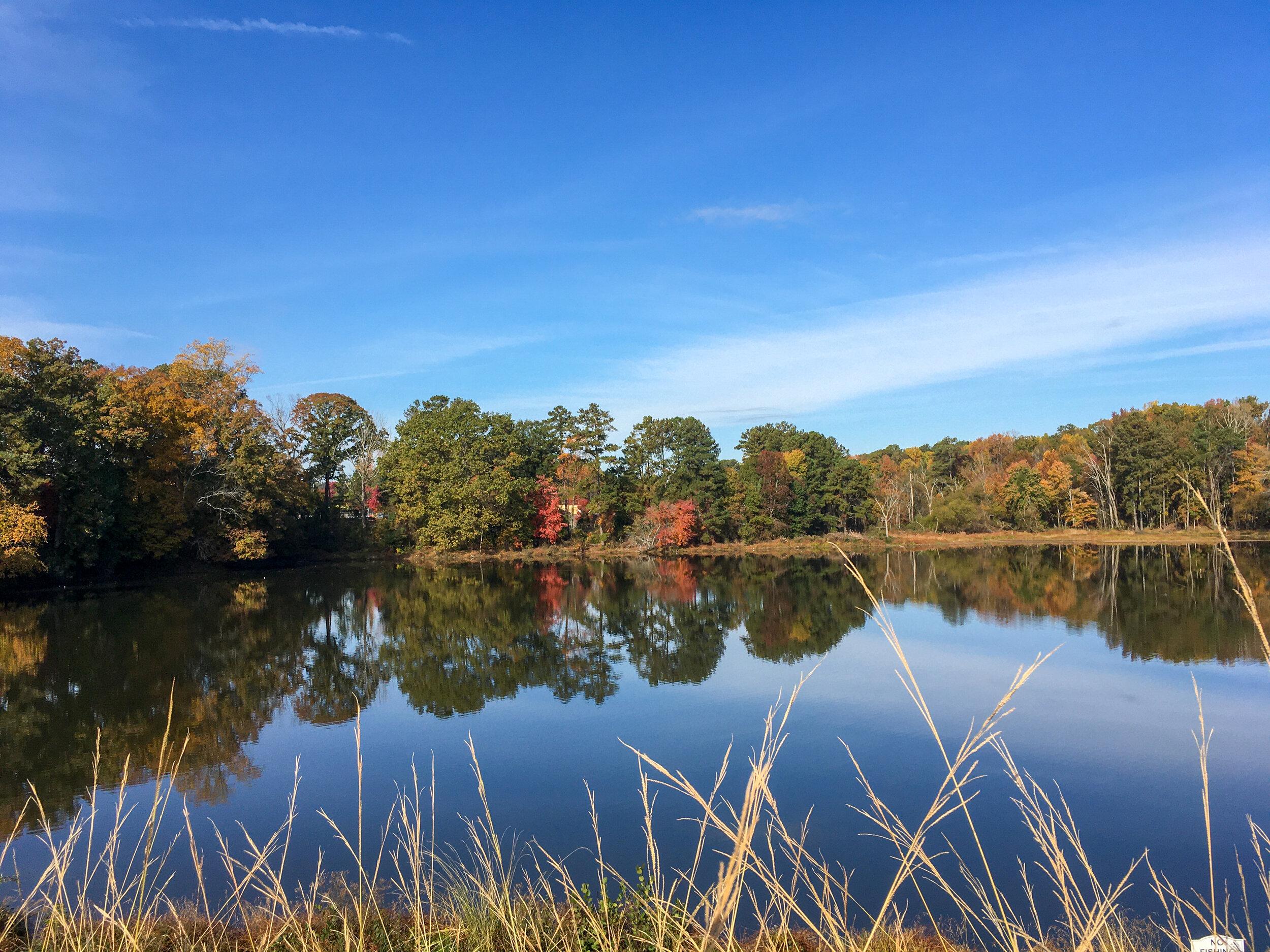 Nelson Lake, November 11, 2019