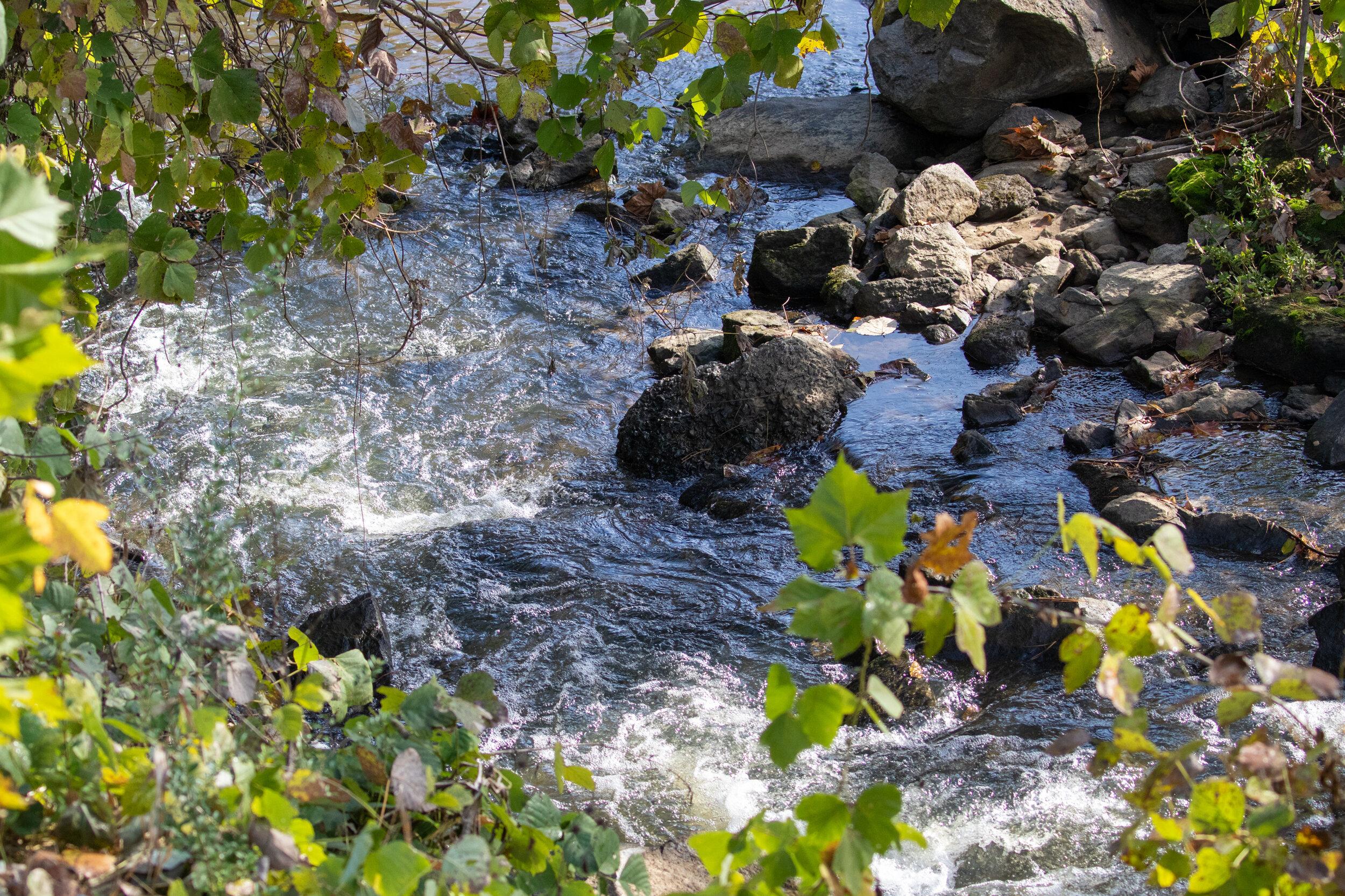 Noonday Creek, November 11, 2019