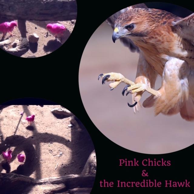 PinkChicks.JPG
