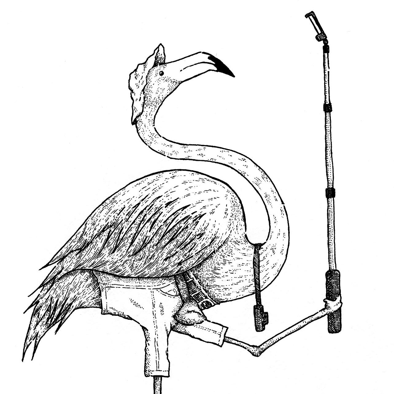 flamingo001.png