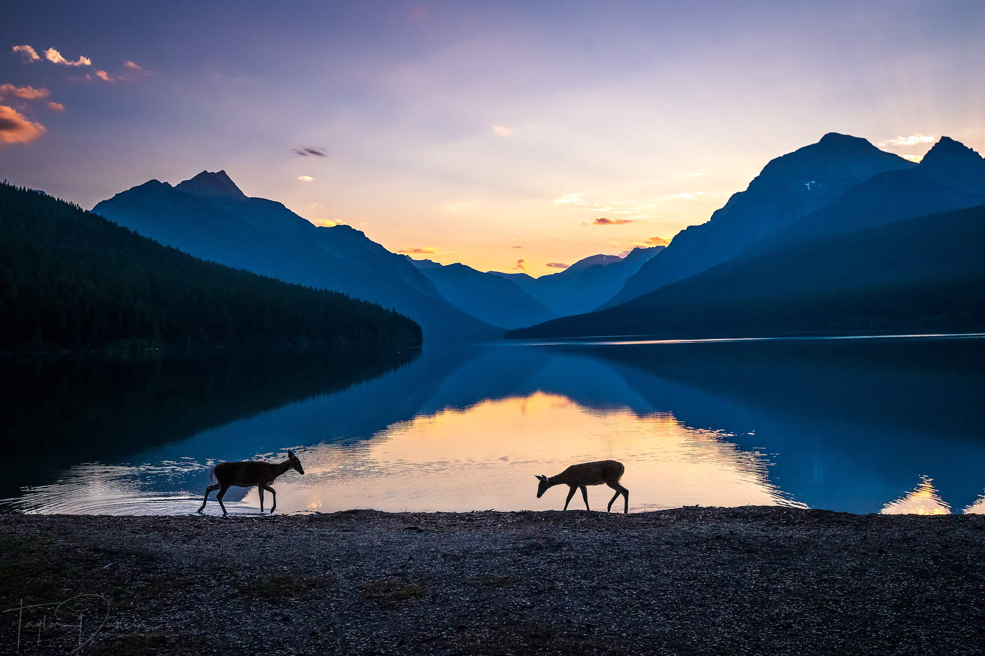 If you're lucky, you can photograph deer on the shoreline of the lake - sunrise in this case
