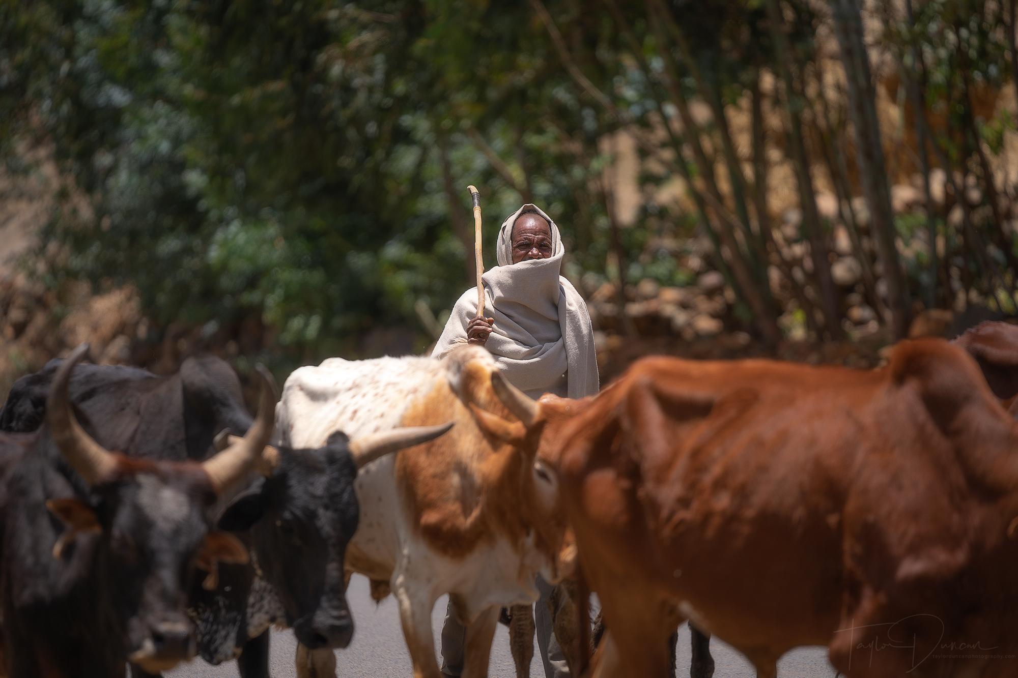 Ethiopian Cowherd