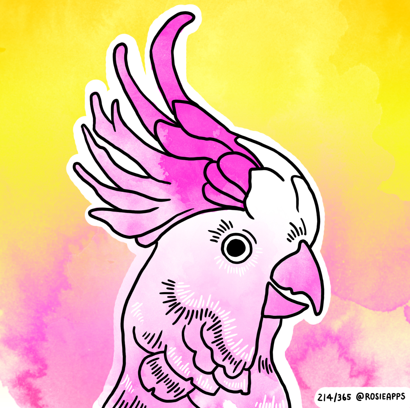 August-214-365 Cockatoo.jpg