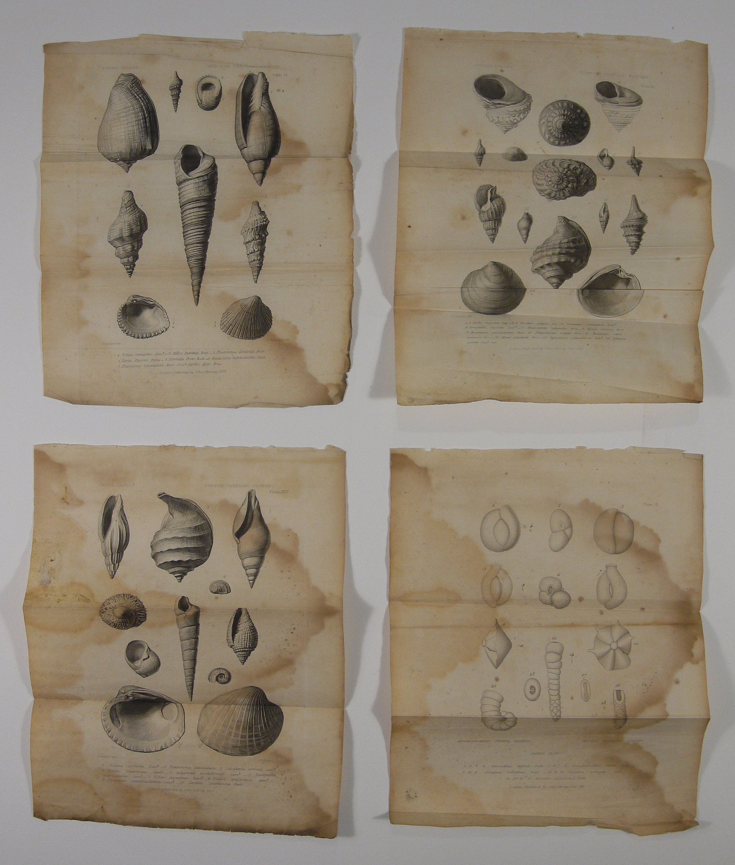 Before treatment, set of four steel engravings, 1835