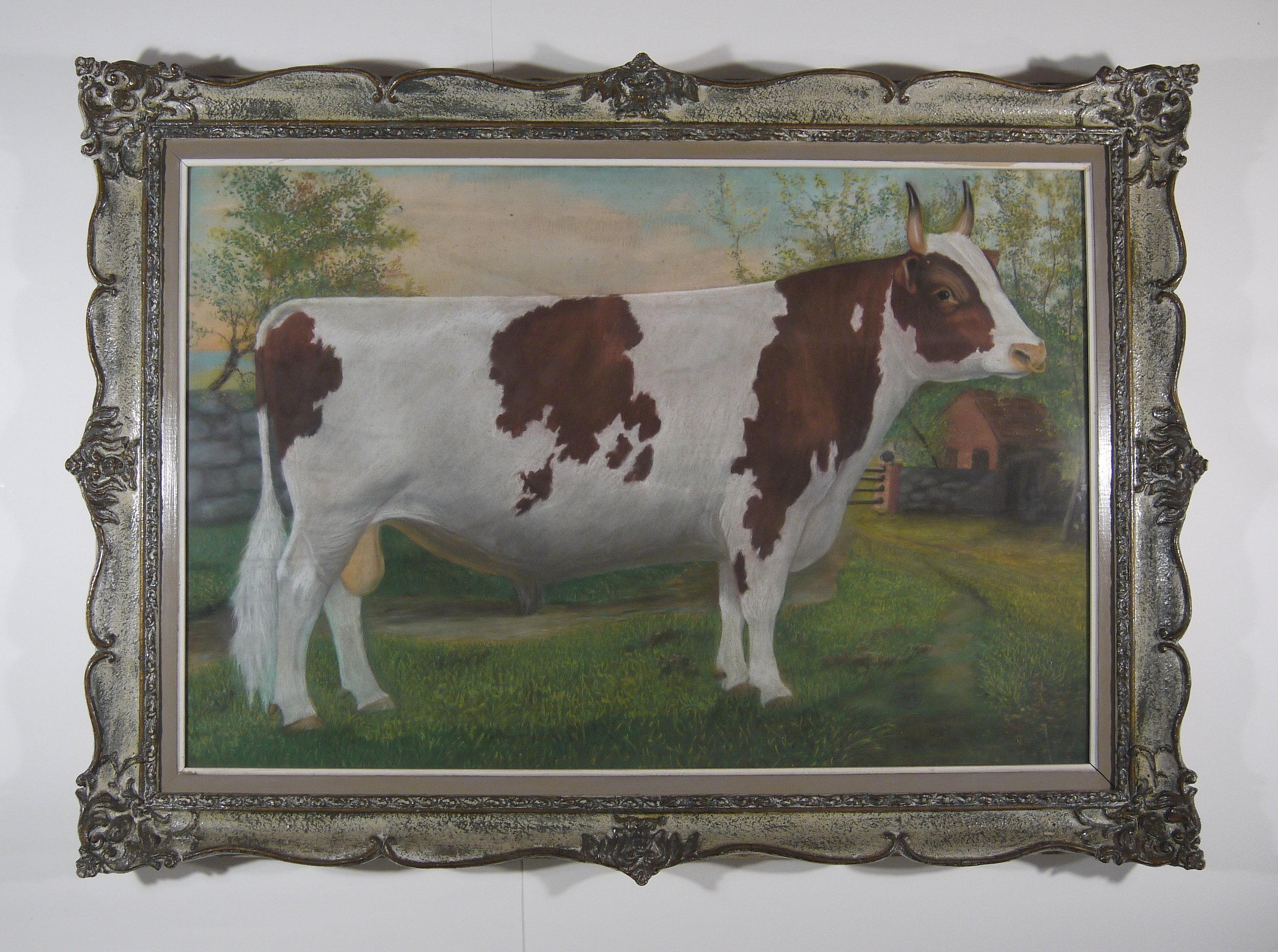 Ross Butler -  Ayrshire Bull  - Before Conservation