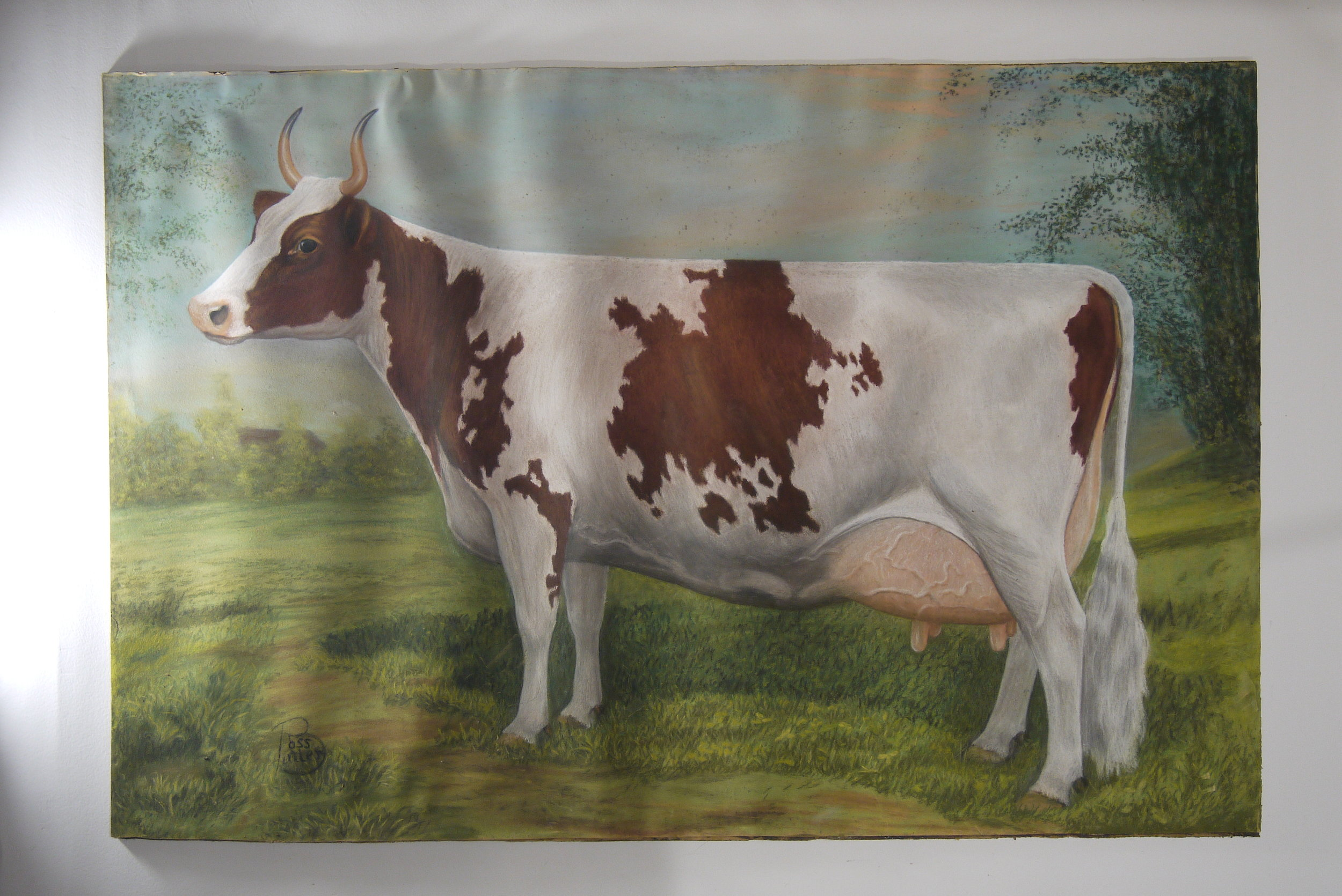 Ayrshire Cow  before conservation - raking light showing planar deformation of paper.