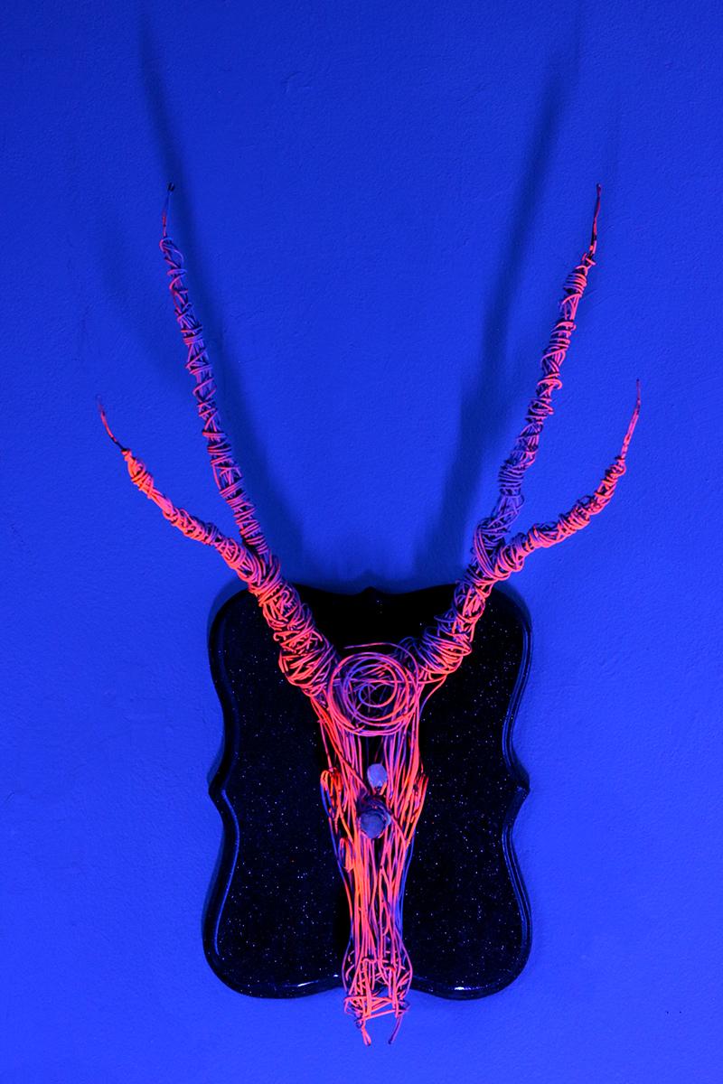 CLARA CERVO (Neon)