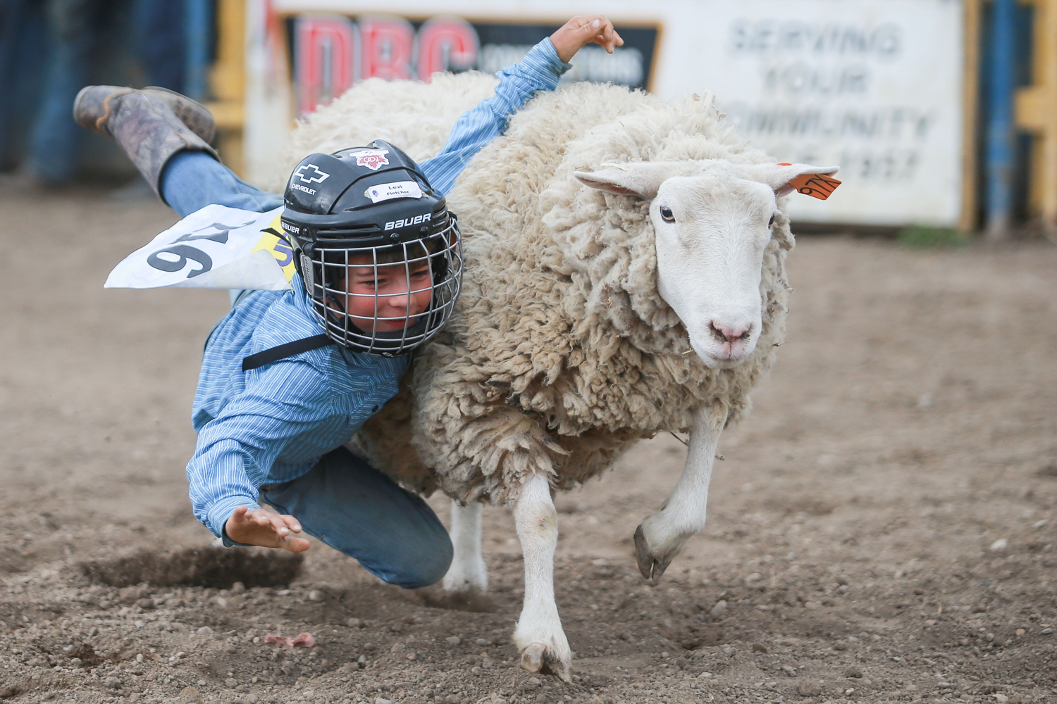 mutton-busting blue shirt.png