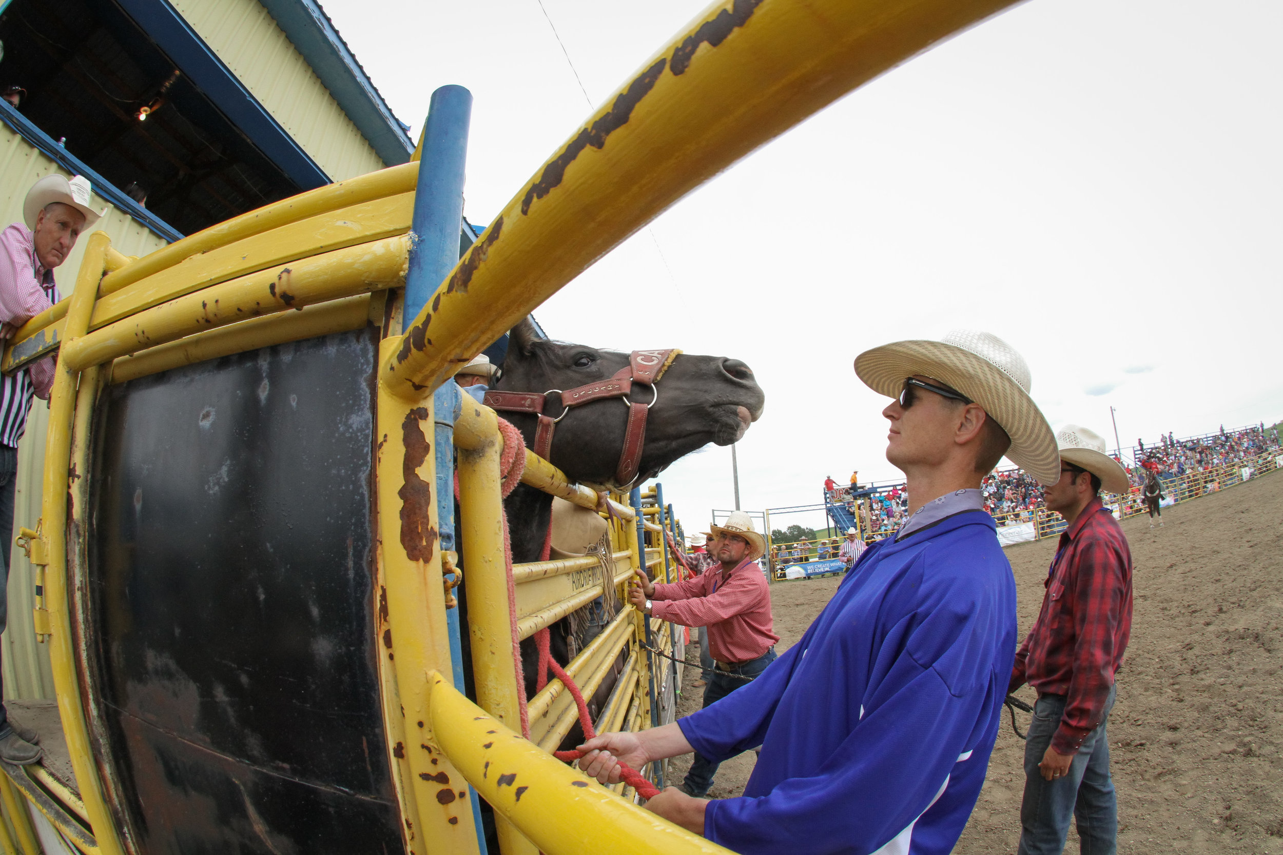 Horse at chute.jpg