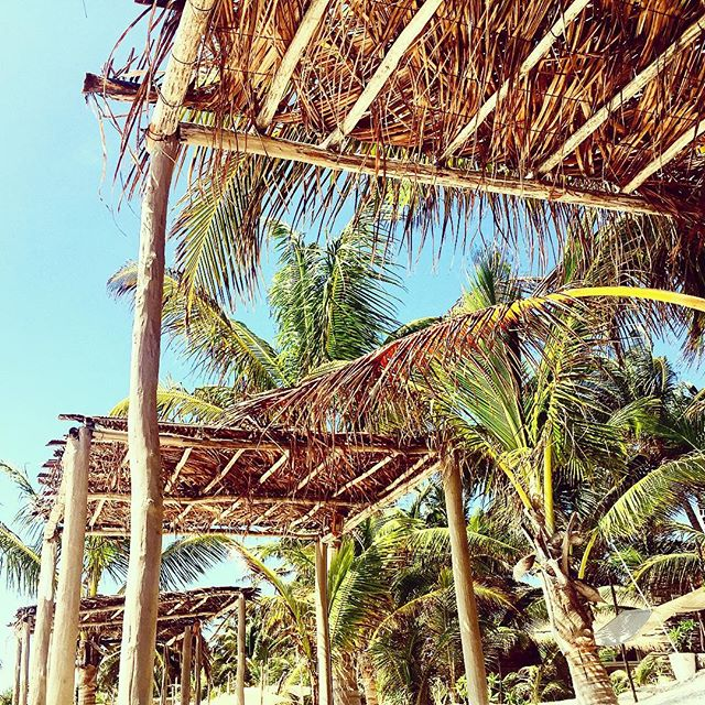Palm tree paradise scene at The Nomade Tulum, Mexico