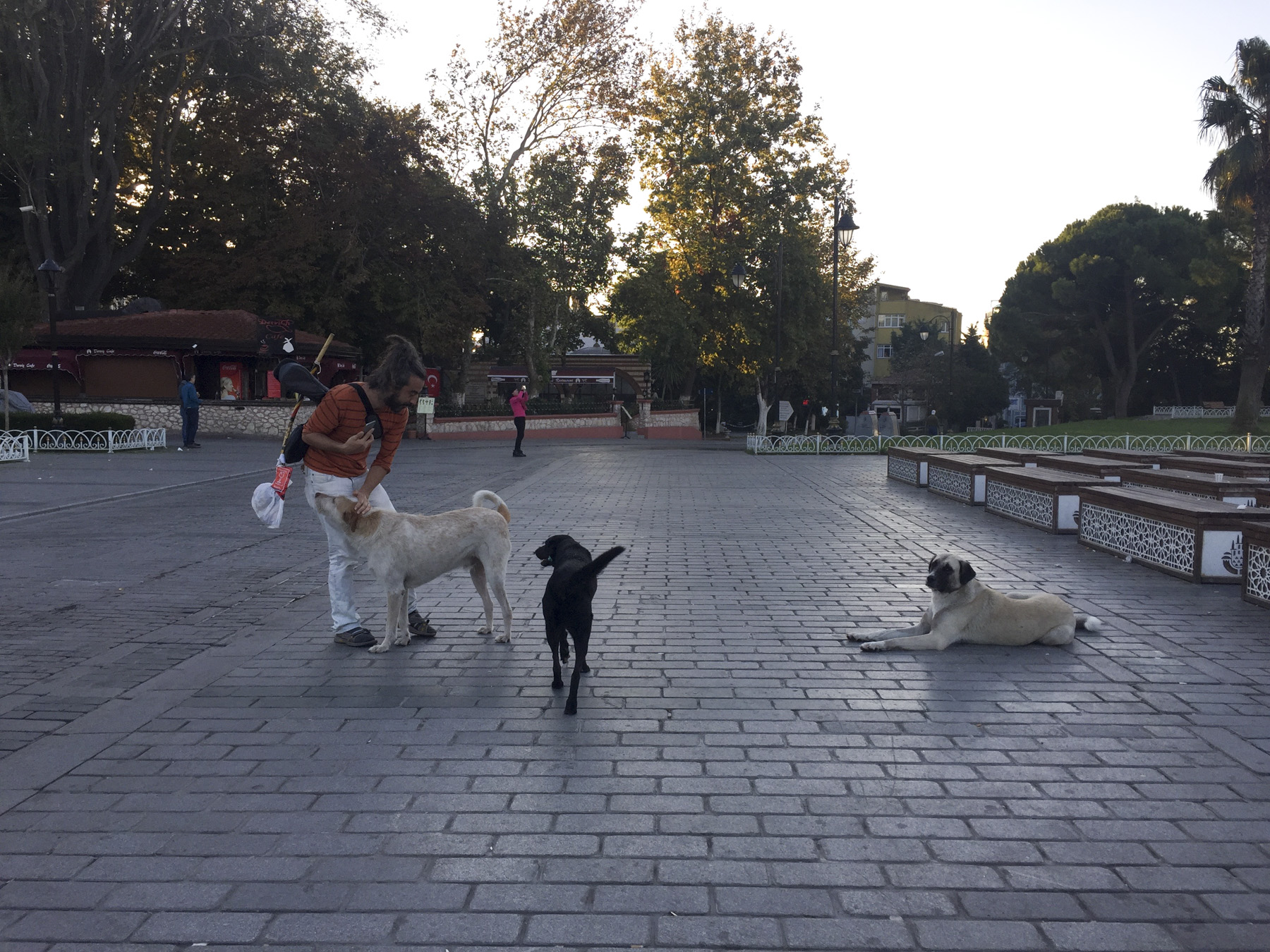 try wonder inspo istanbul turkey musician with stray dogs