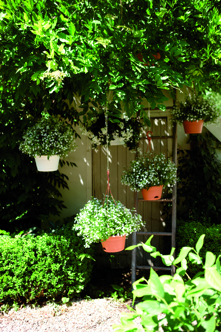 green basics hanging basket.i1.jpg