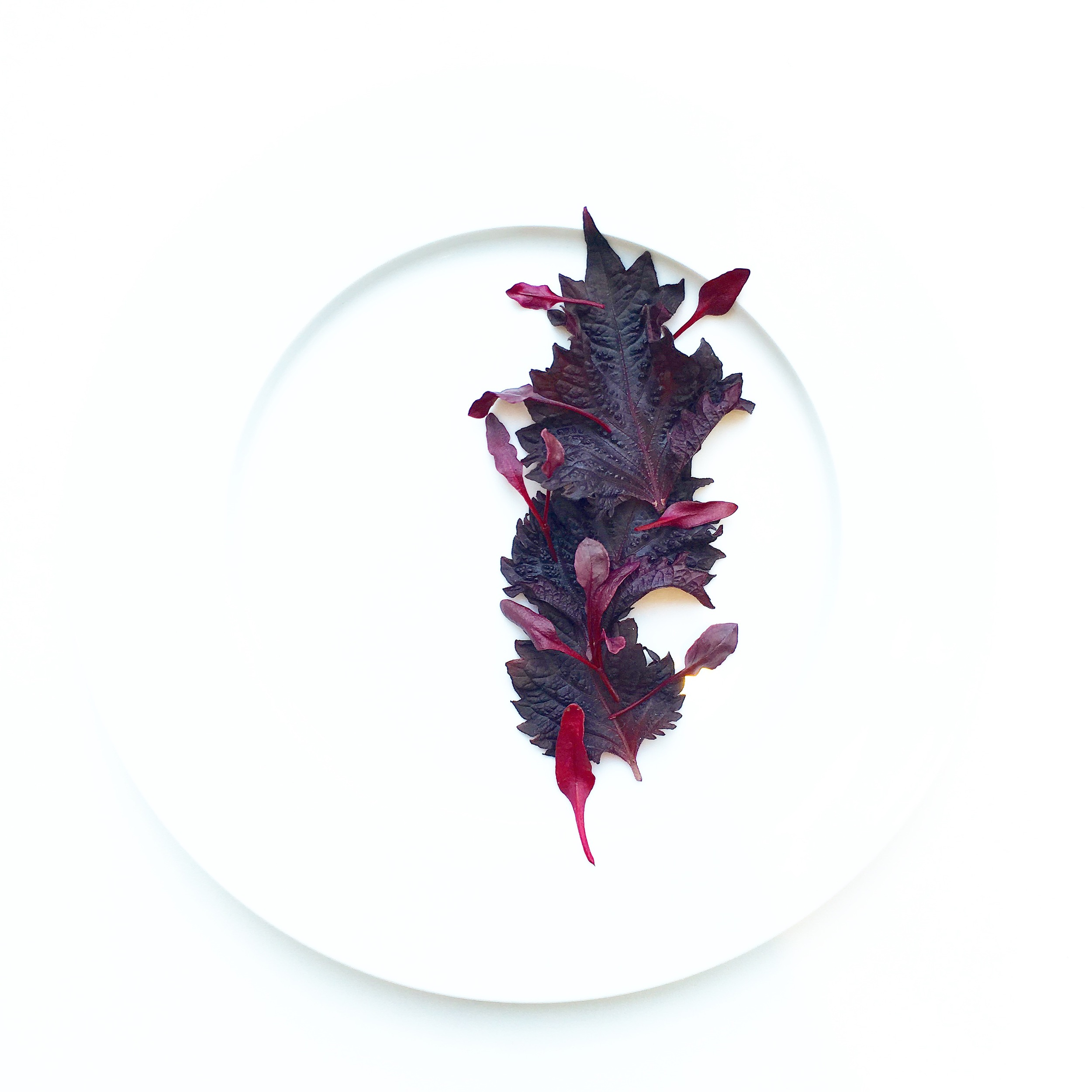Red Shiso, Micro Beets. Grown at Farm.One.