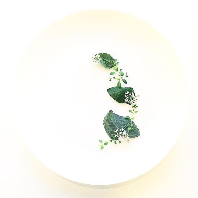 Coriander Flower. Toothache Leaves. Creeping Thyme. Grown in downtown Manhattan. #white #salad #flowers #minimal #vegansofinstagram #food #foodie #foodstagram #nycfood #foodporn #herbs #cilantro #coriander #edibleart