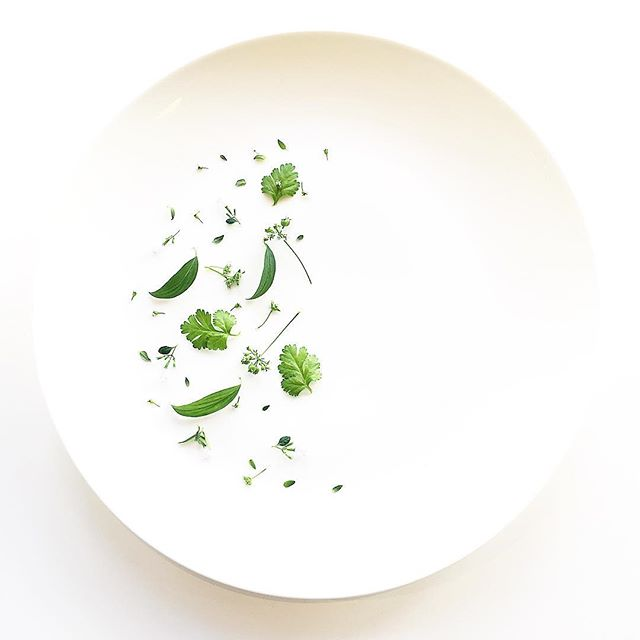 Mountain Mint. Cilantro. Coriander Flower. Nepitella. Thyme. Grown in downtown Manhattan, picked just now. Thank you @fifigalloway for today's plate! #edibleart #coriander #cilantro #herbs #foodporn #farm #urbanag #urbanagriculture #farm #vegan #vegansofig #vegansofinstagram #plantbased #salad