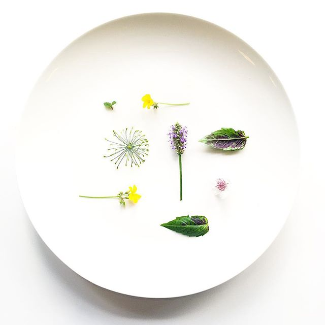 Dill Crown. Anise Hyssop Flower. Wood Sorrel Flower. Purple Ruffles Basil Mutant. Bachelor Button. Apple Mint. Grown in downtown Manhattan at @iceculinary. #plantbased #salad #flowers #minimal #plating #chef #cheflife #herbs #urbanag #urbanagriculture #vegansofinstagram #vegansofig #vegan #nycfood #foodie #foodstagram #foodporn
