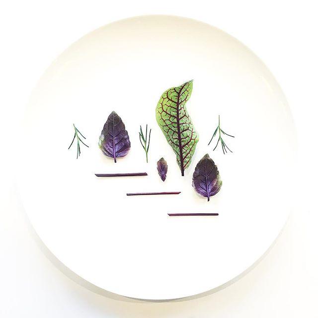 Red Rubin Basil. Saltwort. Red Veined Sorrel & Stems. Grown in downtown Manhattan today. #salad #minimal #cheflife #chef #eatmoregreens #sorrel #basil #saltwort #herbs #plantbased #vegan #vegansofig #vegansofinstagram #urbanag #urbanagriculture #nycfood #foodie #foodporn