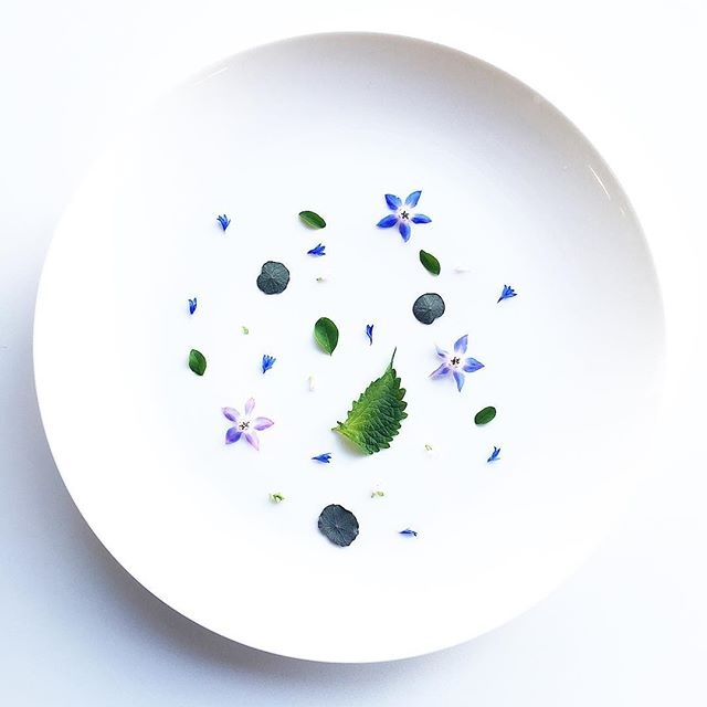Borage Flowers. Green Shiso. Night & Day Nasturtium. Moringa. Bachelor Button Petals. Oregano Flower. #foodie #foodporn #nycfood #urbanagriculture #urbanag #flowers #minimal #plate #eatmoregreens #vegan #veganfoodshare #vegansofig #plantbased #chef #cheflife