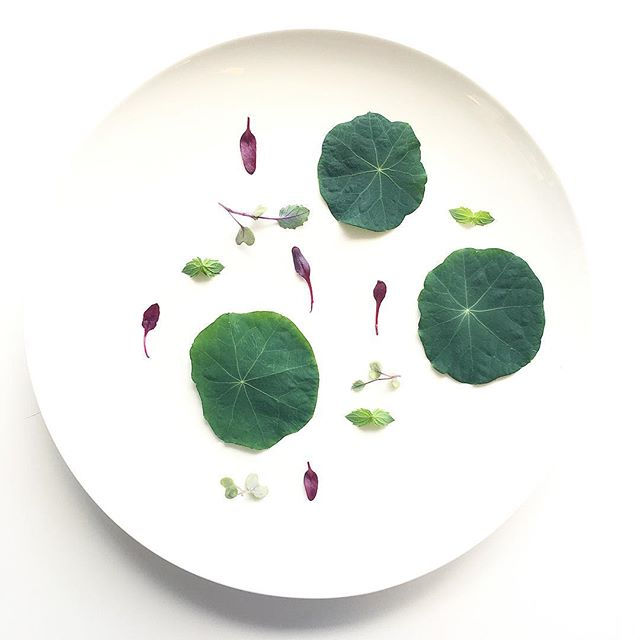 Nasturtium. Micro Beets. Micro Mustard. Peppermint. Grown right here in NYC. #chef #cheflife #cheflife🔪 #plants #plantbased #nycfood #foodie #foodporn #minimal #vegan #vegansofig
