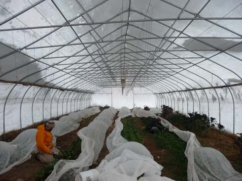 wintergreenhouse.jpg