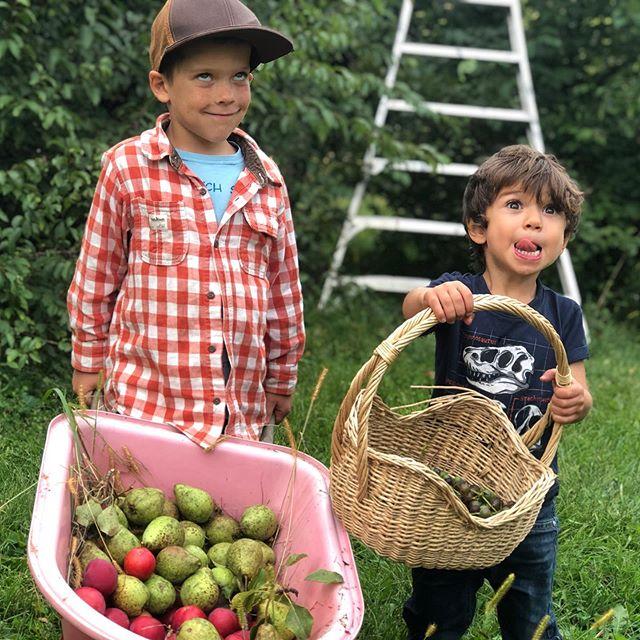 Fruit boyz