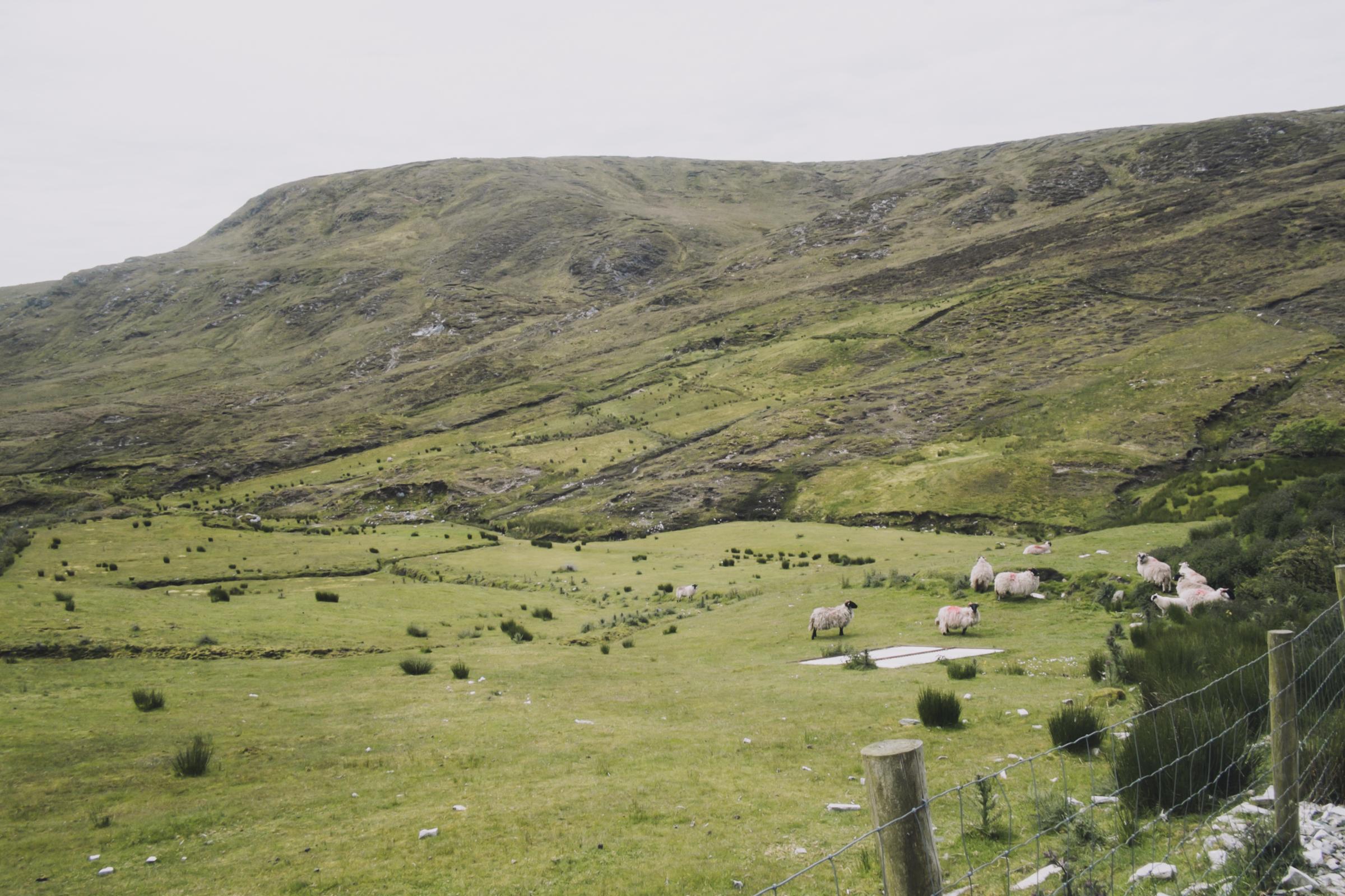 20150615-057-Ireland_Travel_Editorial.jpg