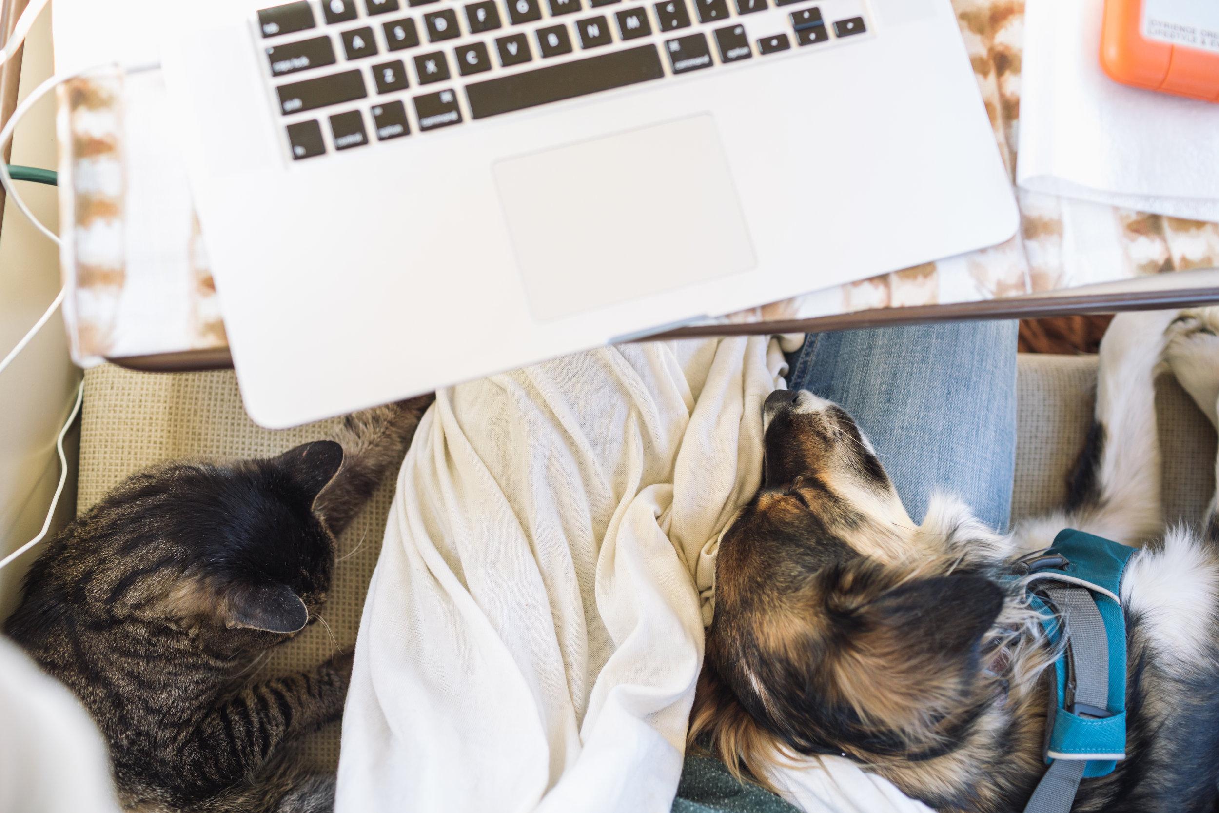 Bosley + Lola | Co-Workers