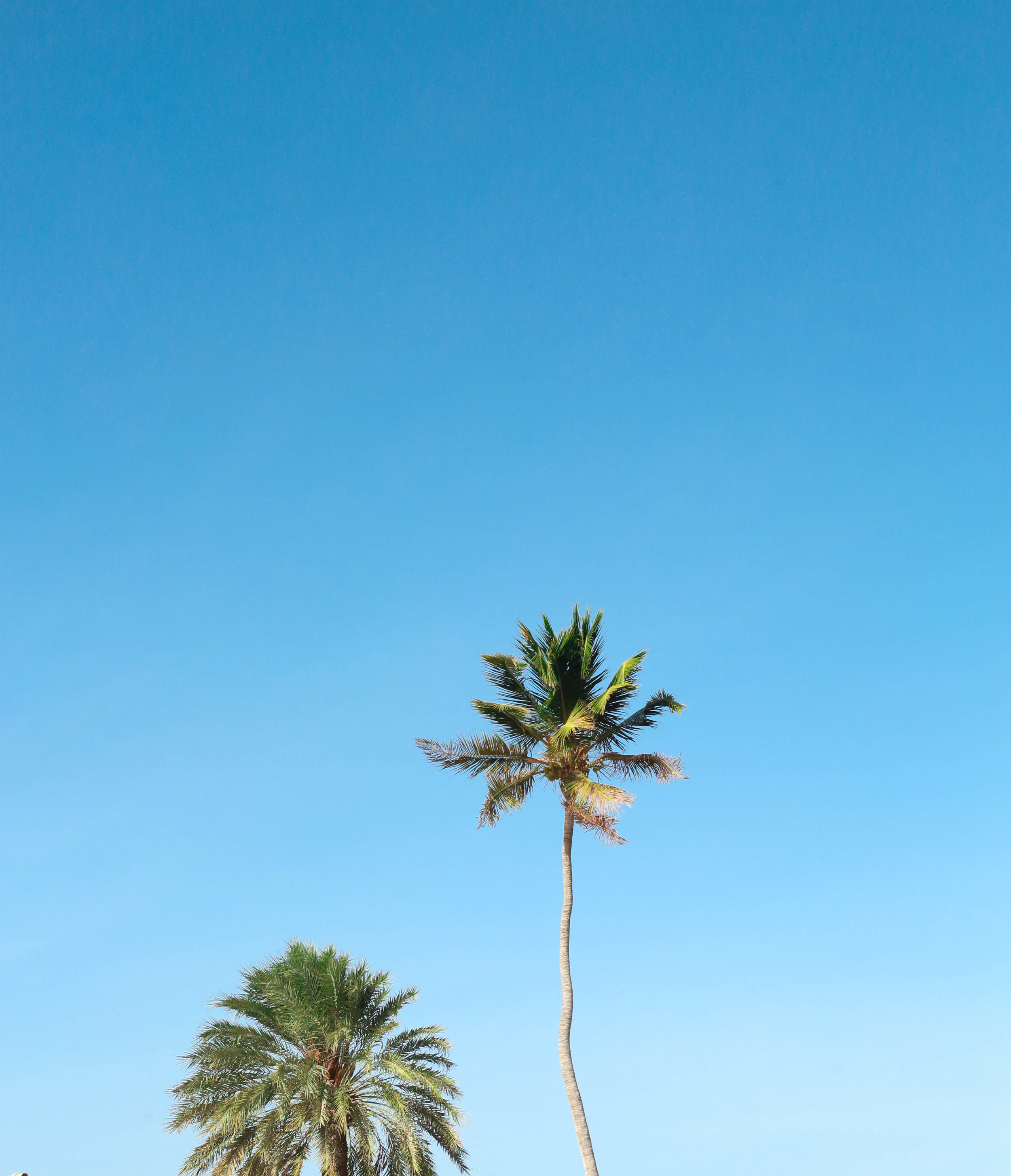 ARUBA PALMS 20.jpg