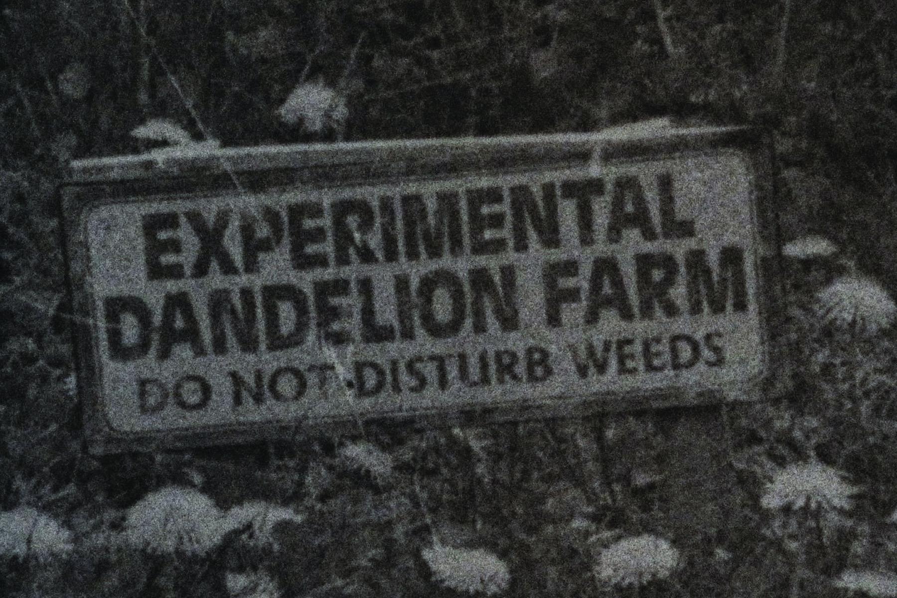 Dawn George's  See Weeds
