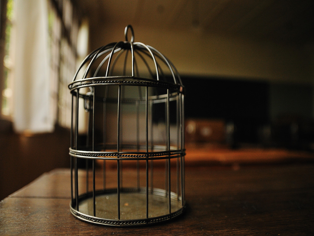Why the Caged Bird Sings  $1250