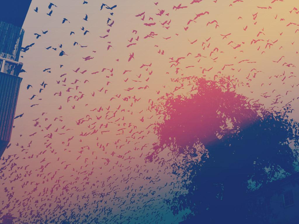 Bird Effects  $750