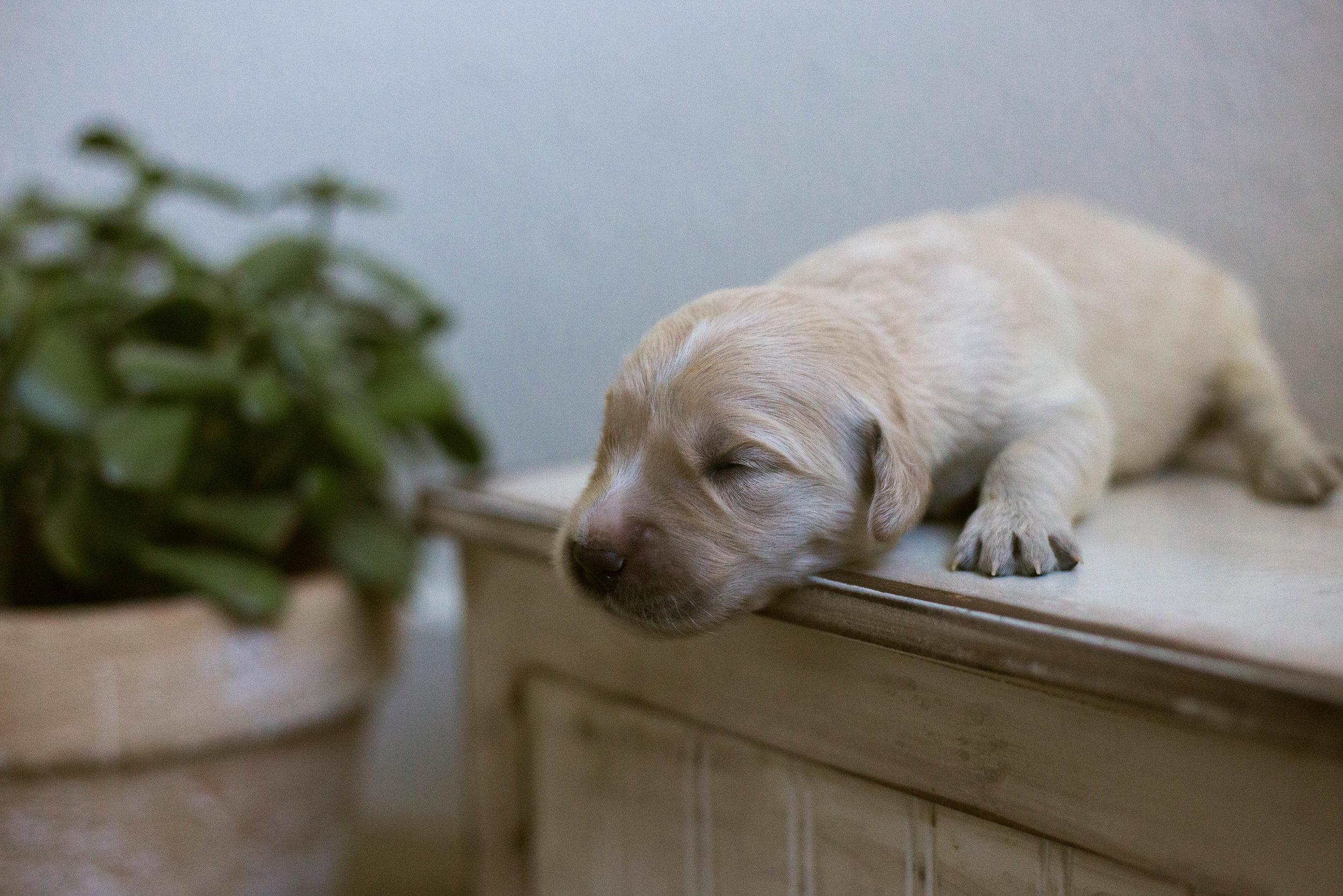 Puppies_1week-3.jpg