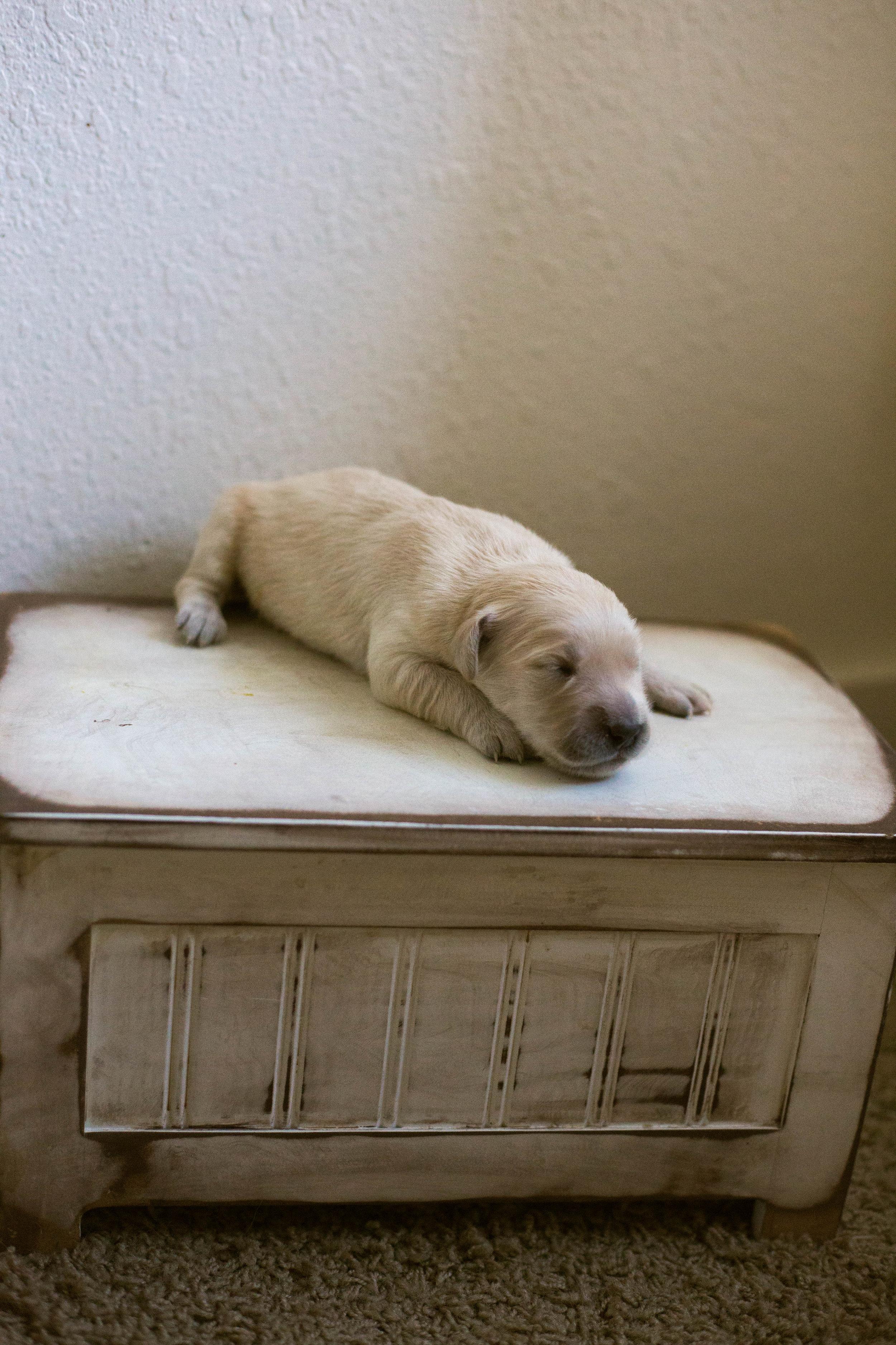 Puppies_1week-2.jpg