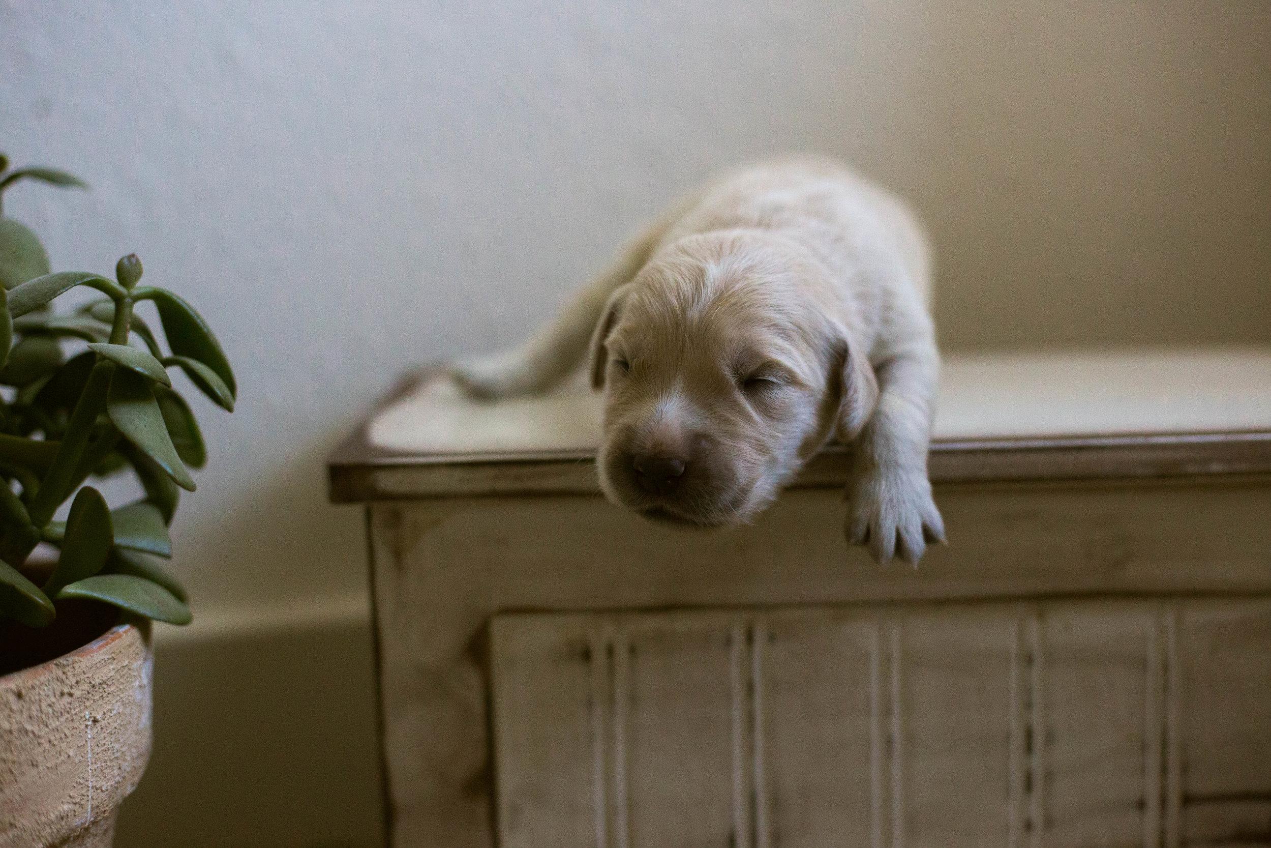 Puppies_1week-4.jpg