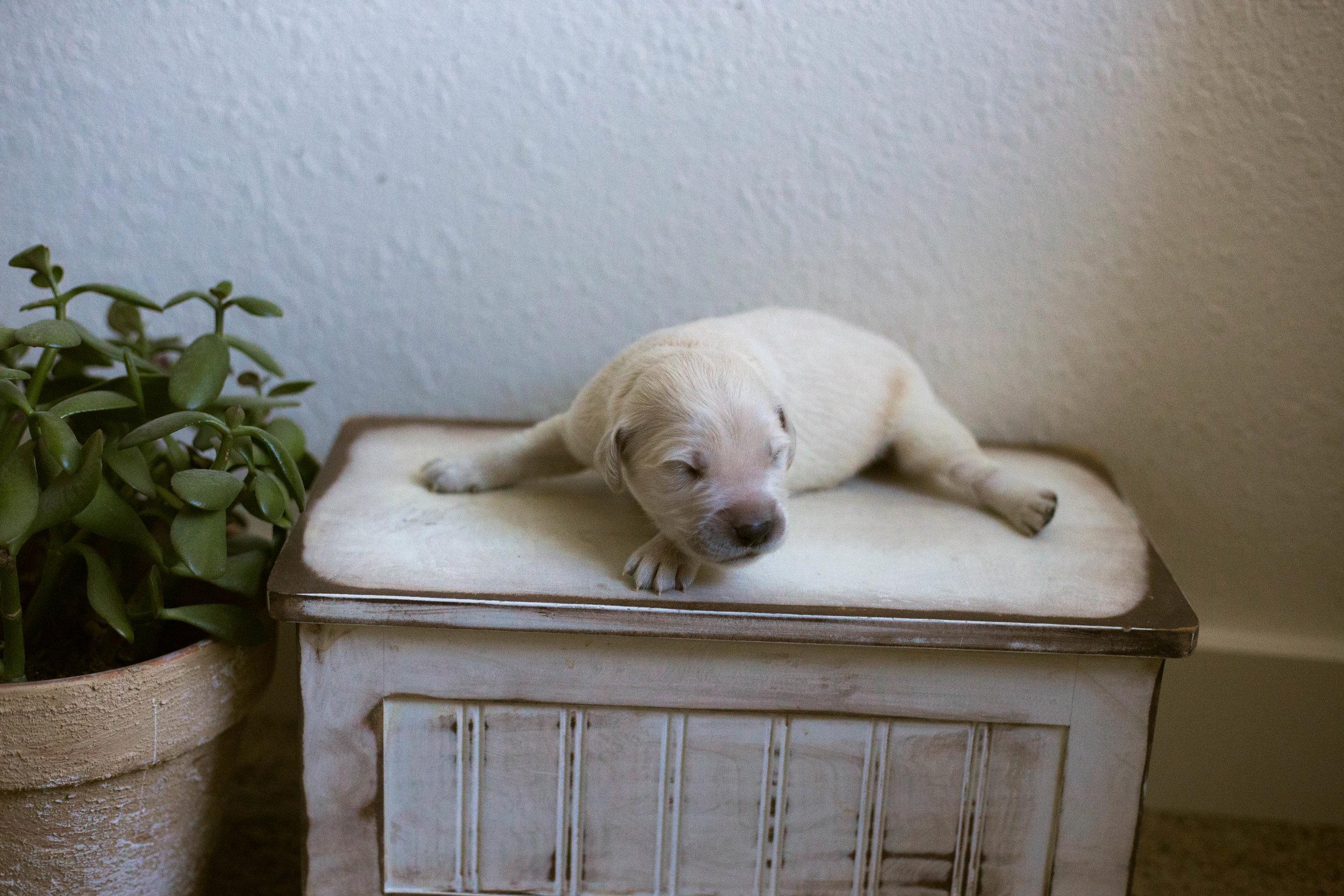 Puppies_1week-8.jpg