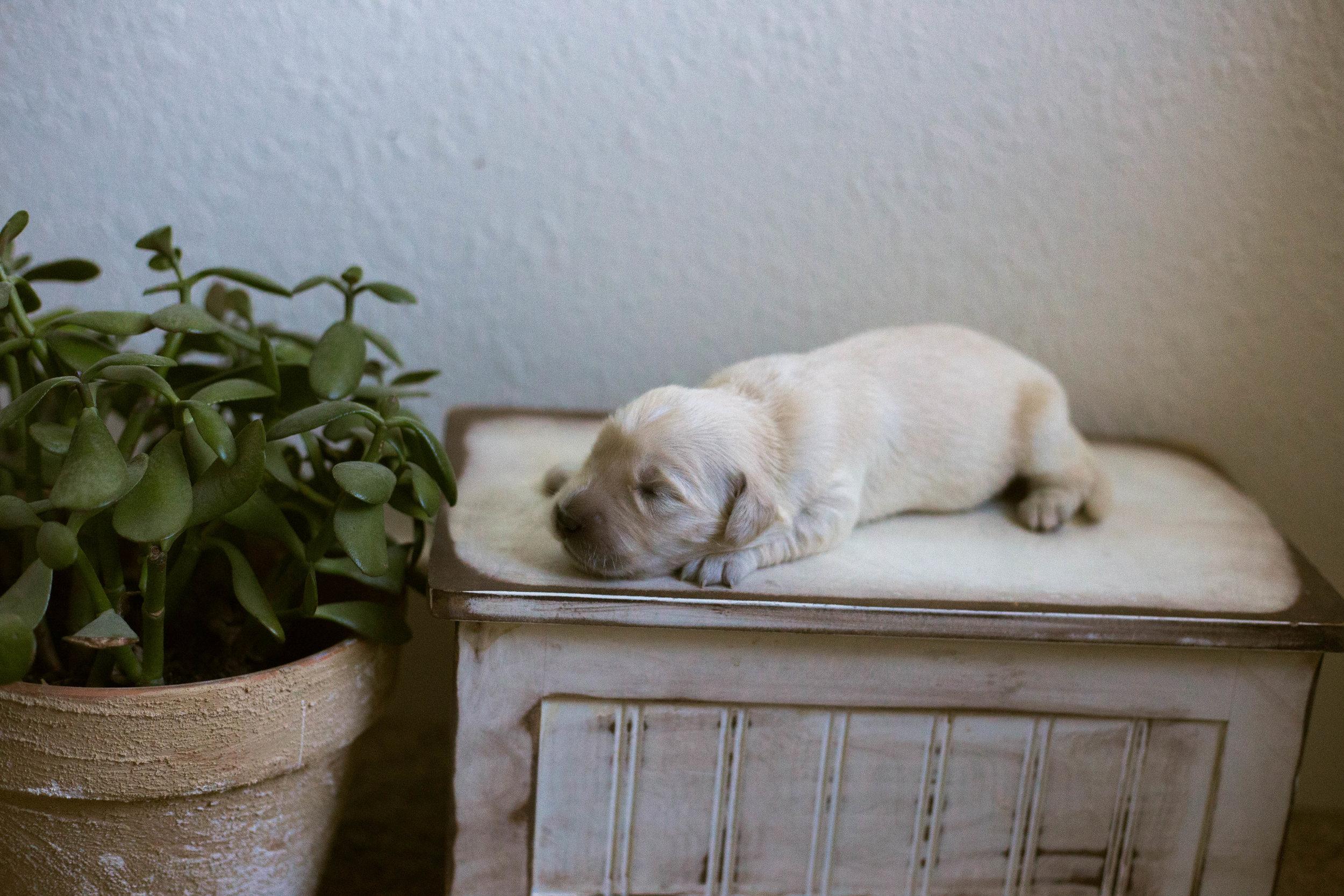Puppies_1week-9.jpg