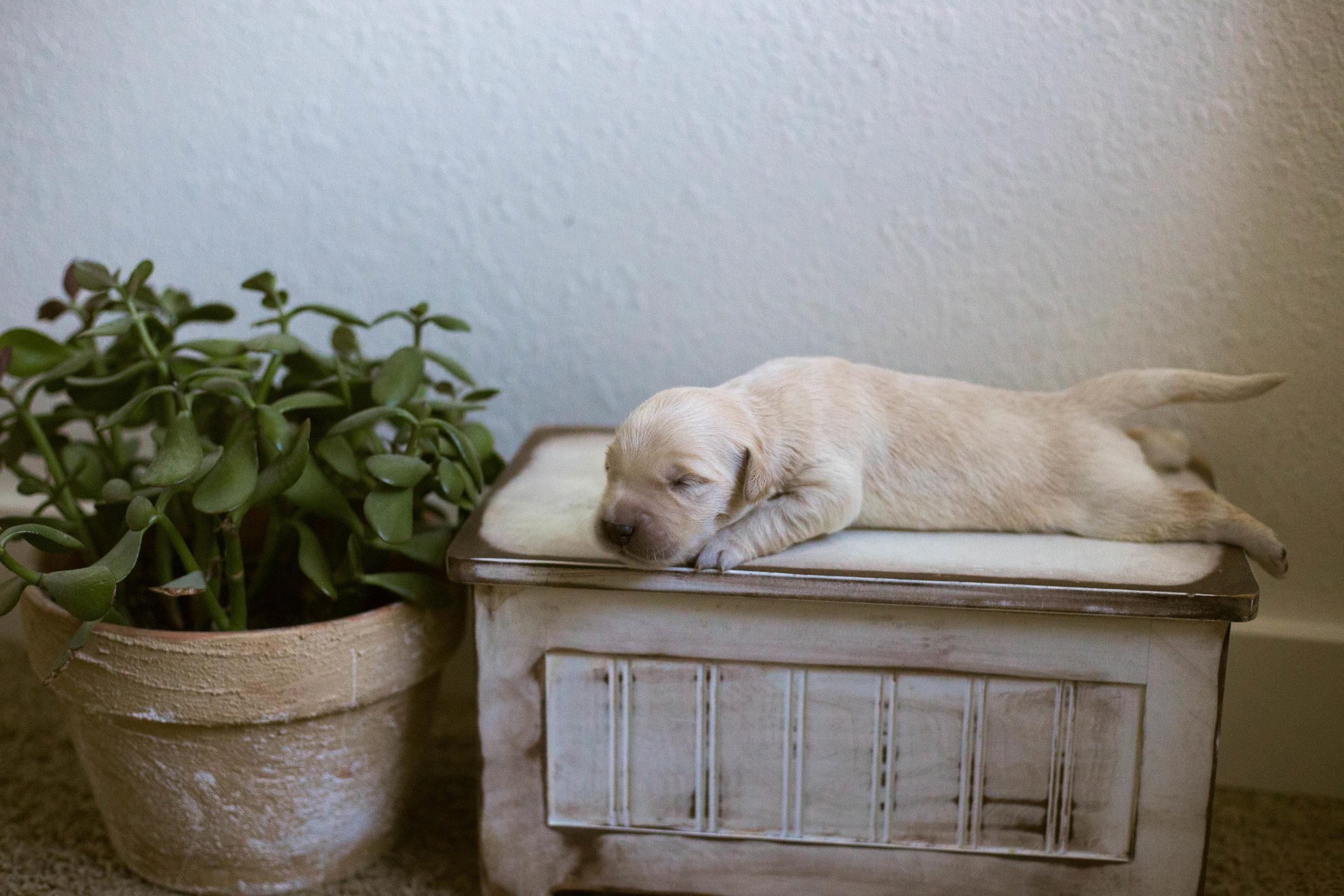 Puppies_1week-10.jpg