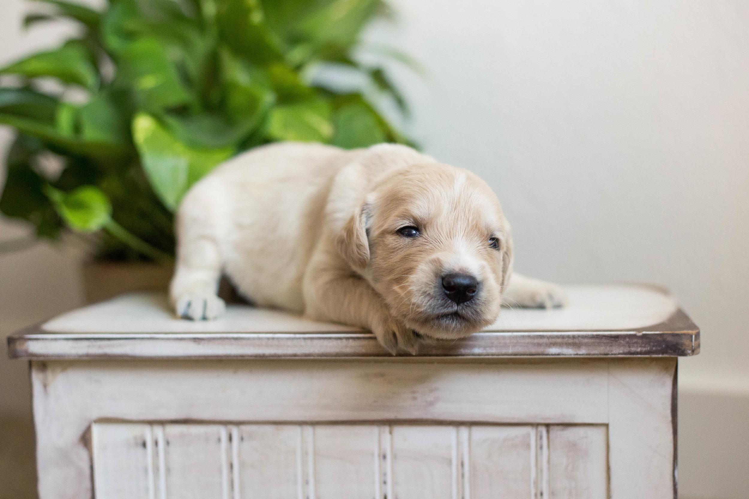 Puppies_2week-02.jpg