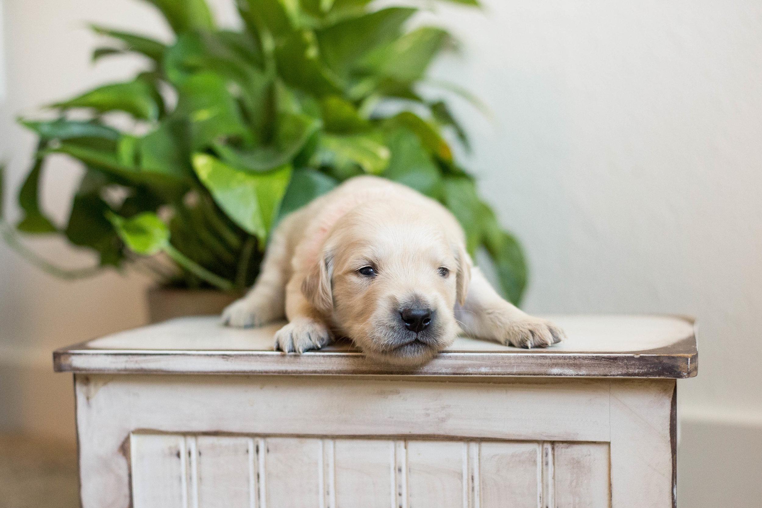 Puppies_2week-03.jpg