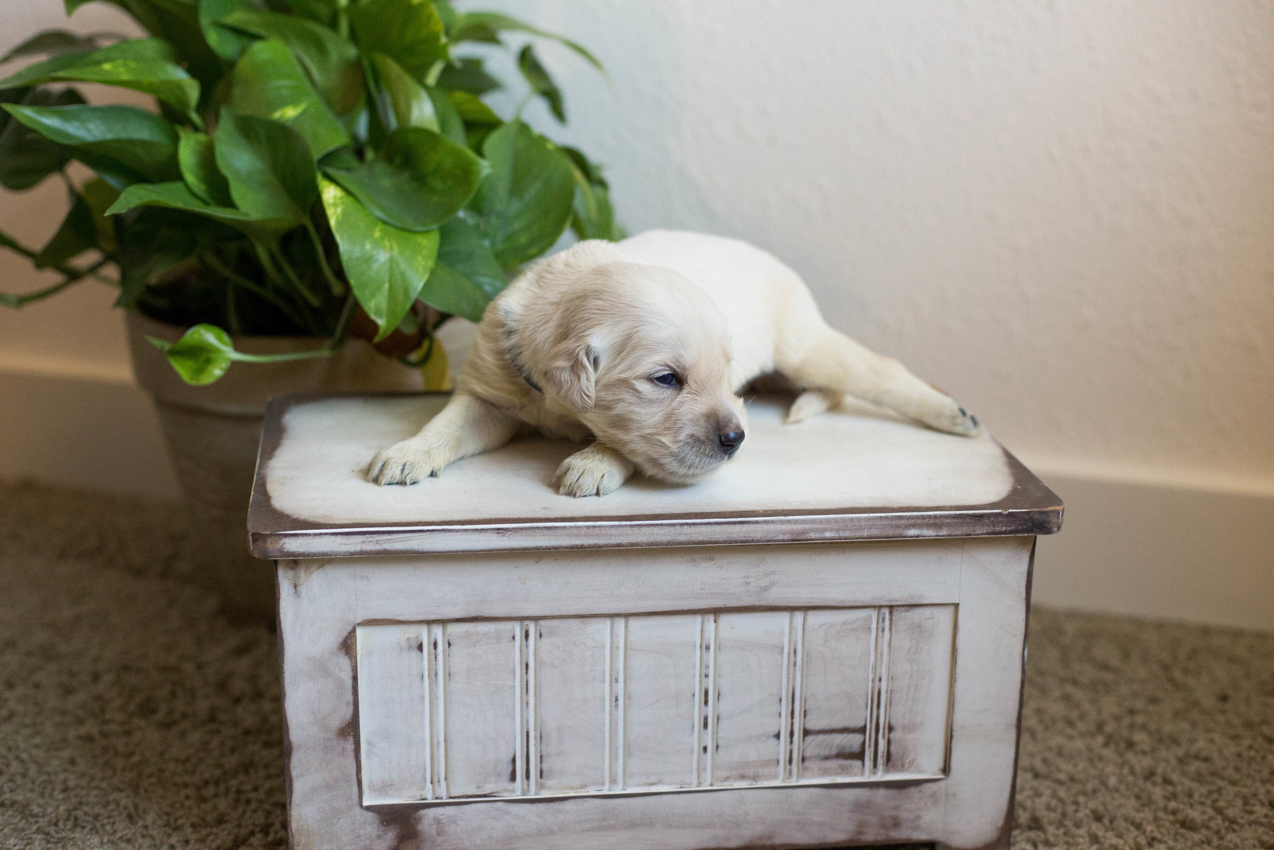 Puppies_2week-07.jpg