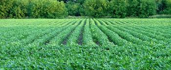 agriculture issues NEAFA